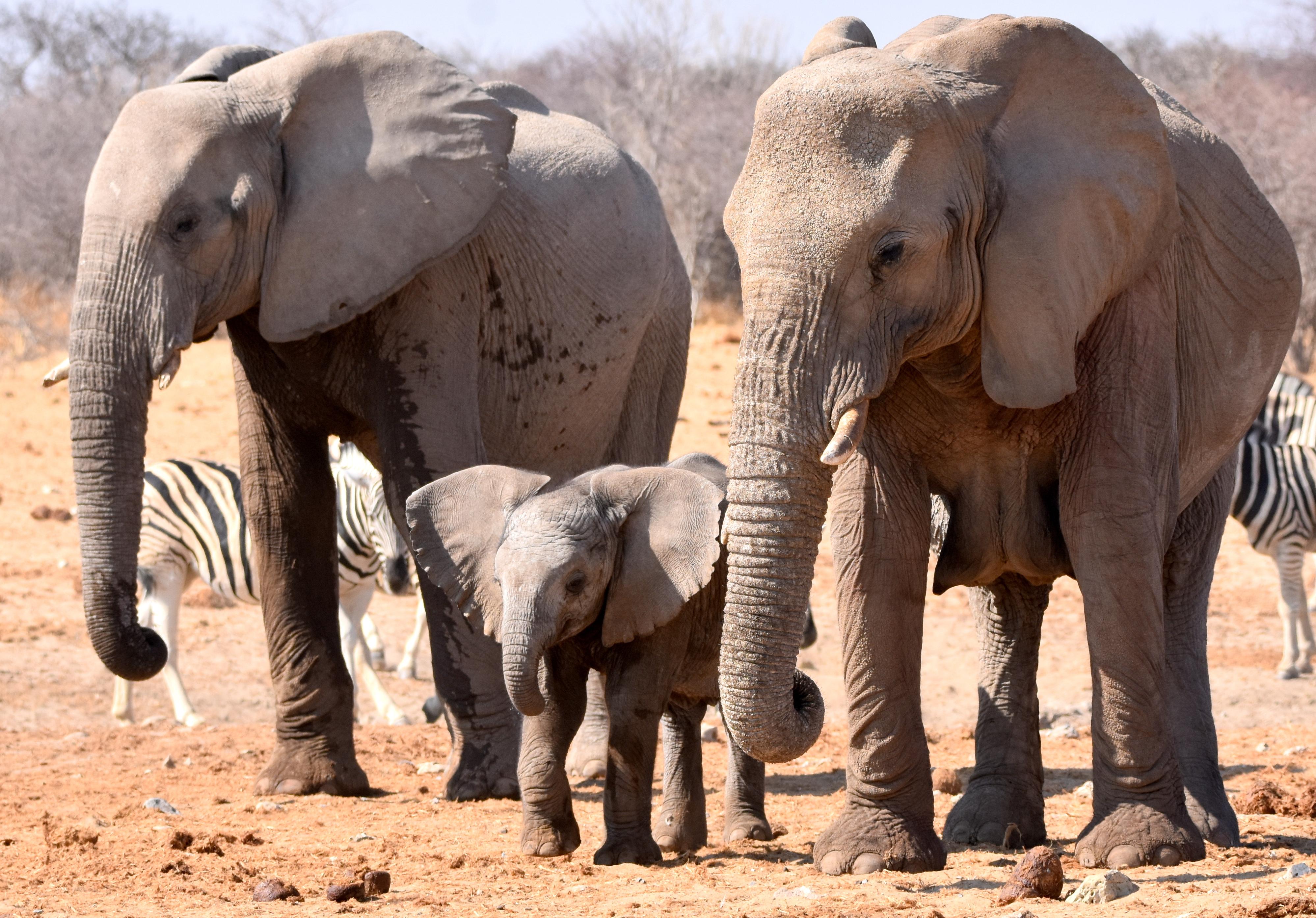 Fond D Ecran Animaux La Nature Faune Bebe Afrique Zoo
