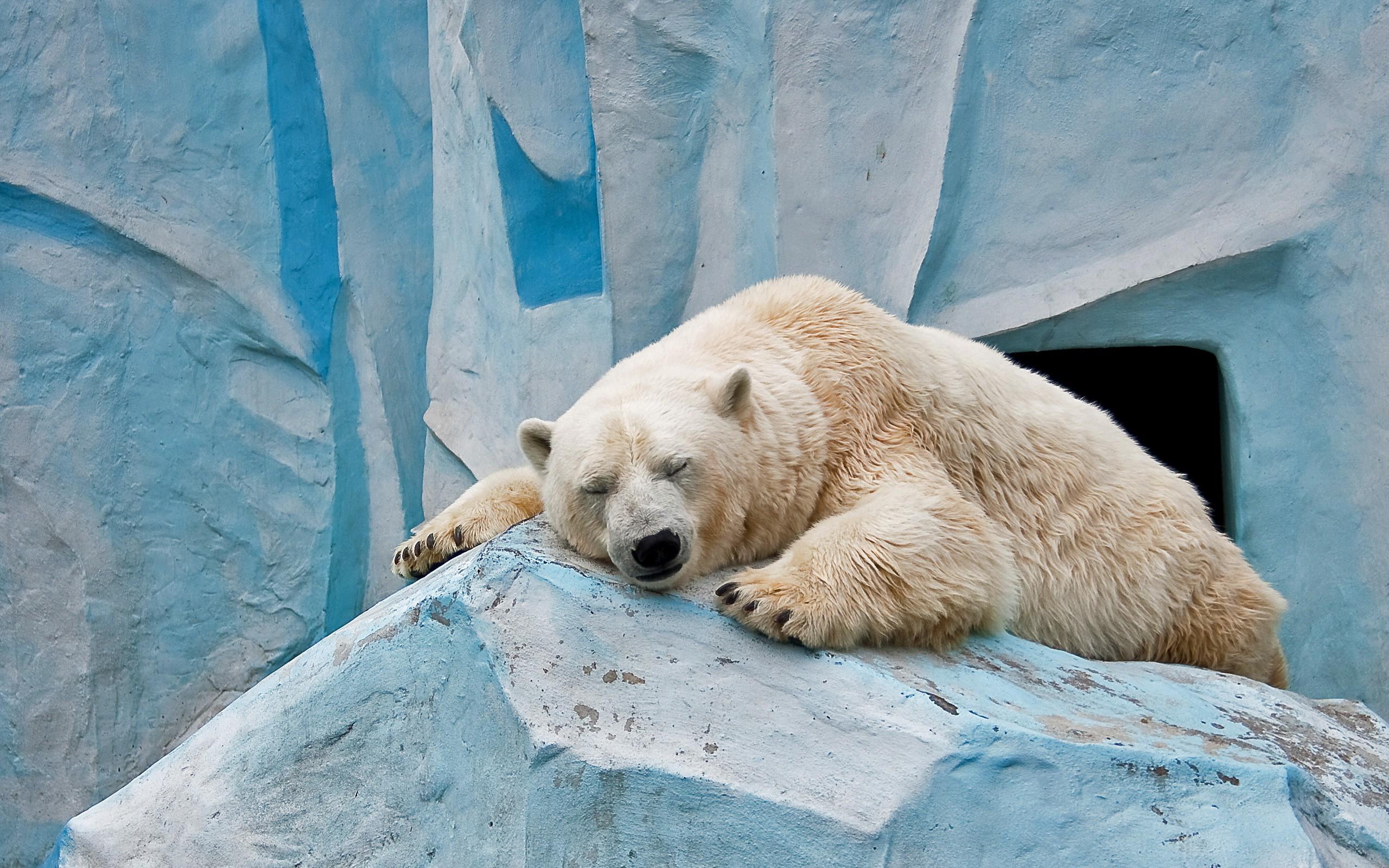 wallpaper : animals, nature, winter, blue, polar bears, zoo, arctic