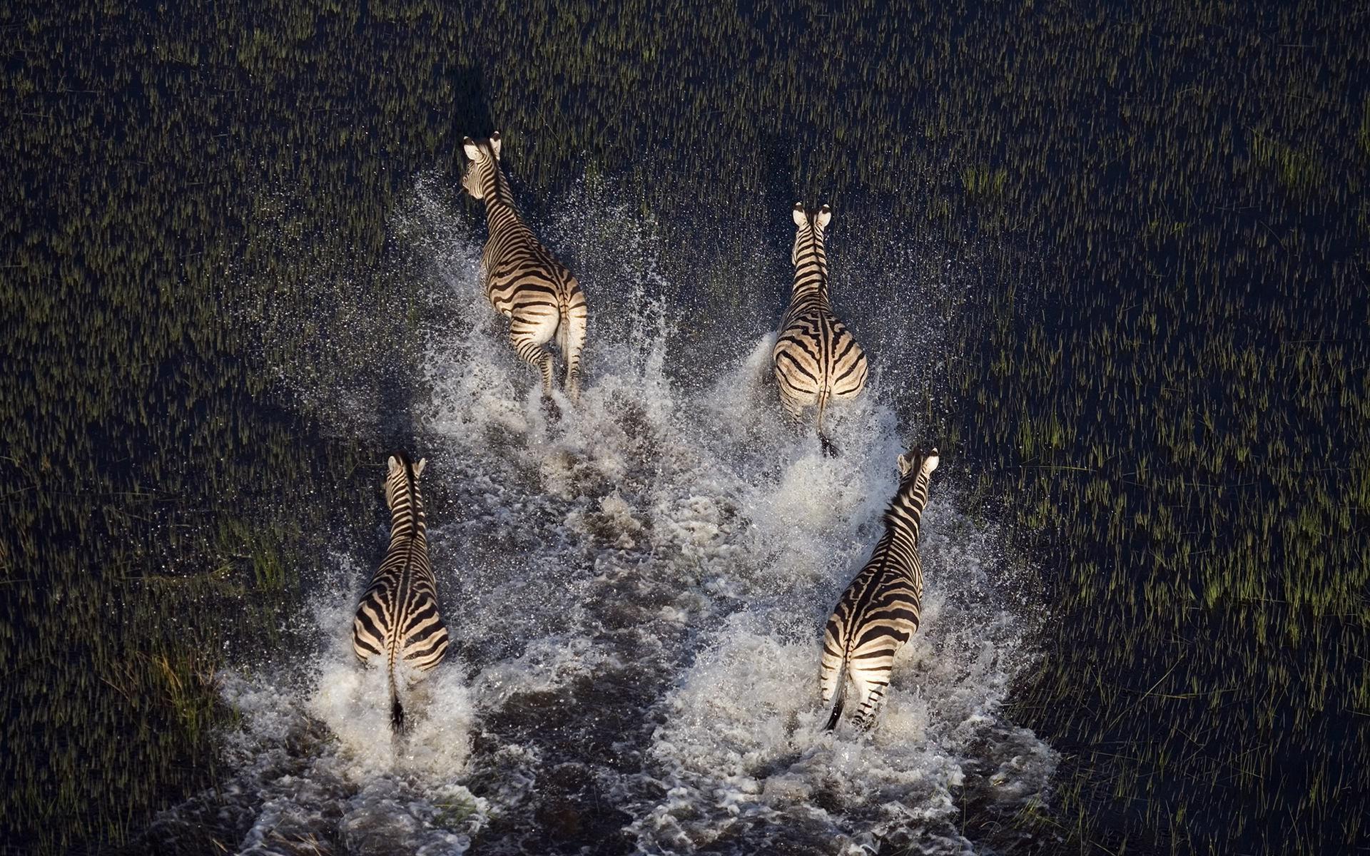 Fantastic Wallpaper Night Animal - animals-night-nature-zebras-tree-1920x1200-px-727184  Pic.jpg