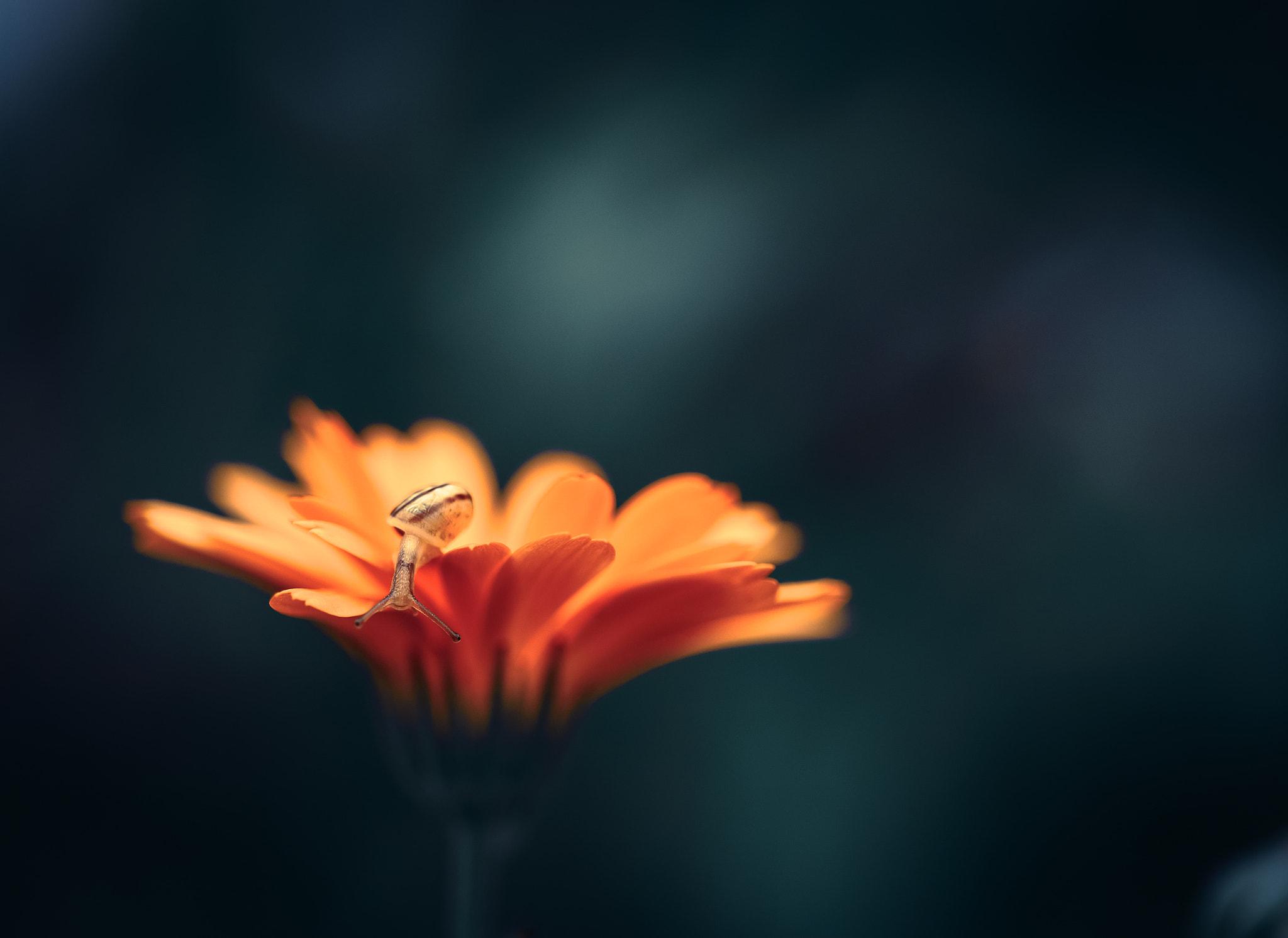 デスクトップ壁紙 動物 オレンジ色の花 スラグ 閉じる
