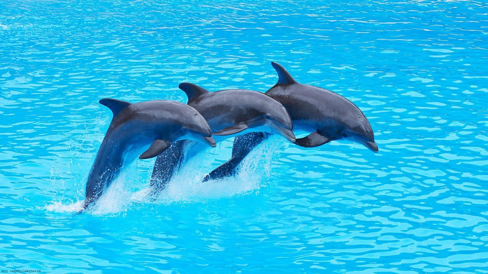 Как выглядят дельфины