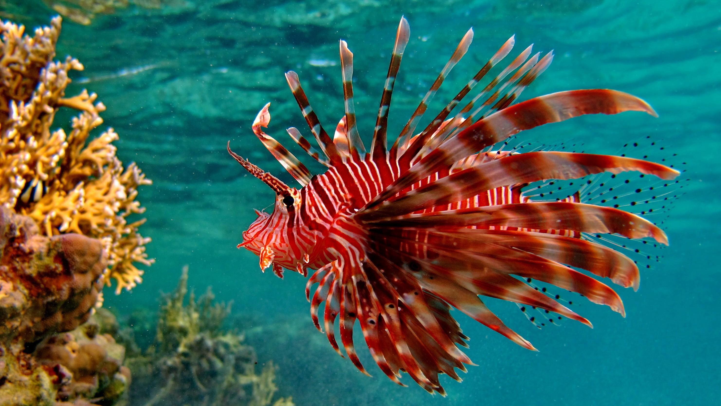 красивые морские рыбы фото