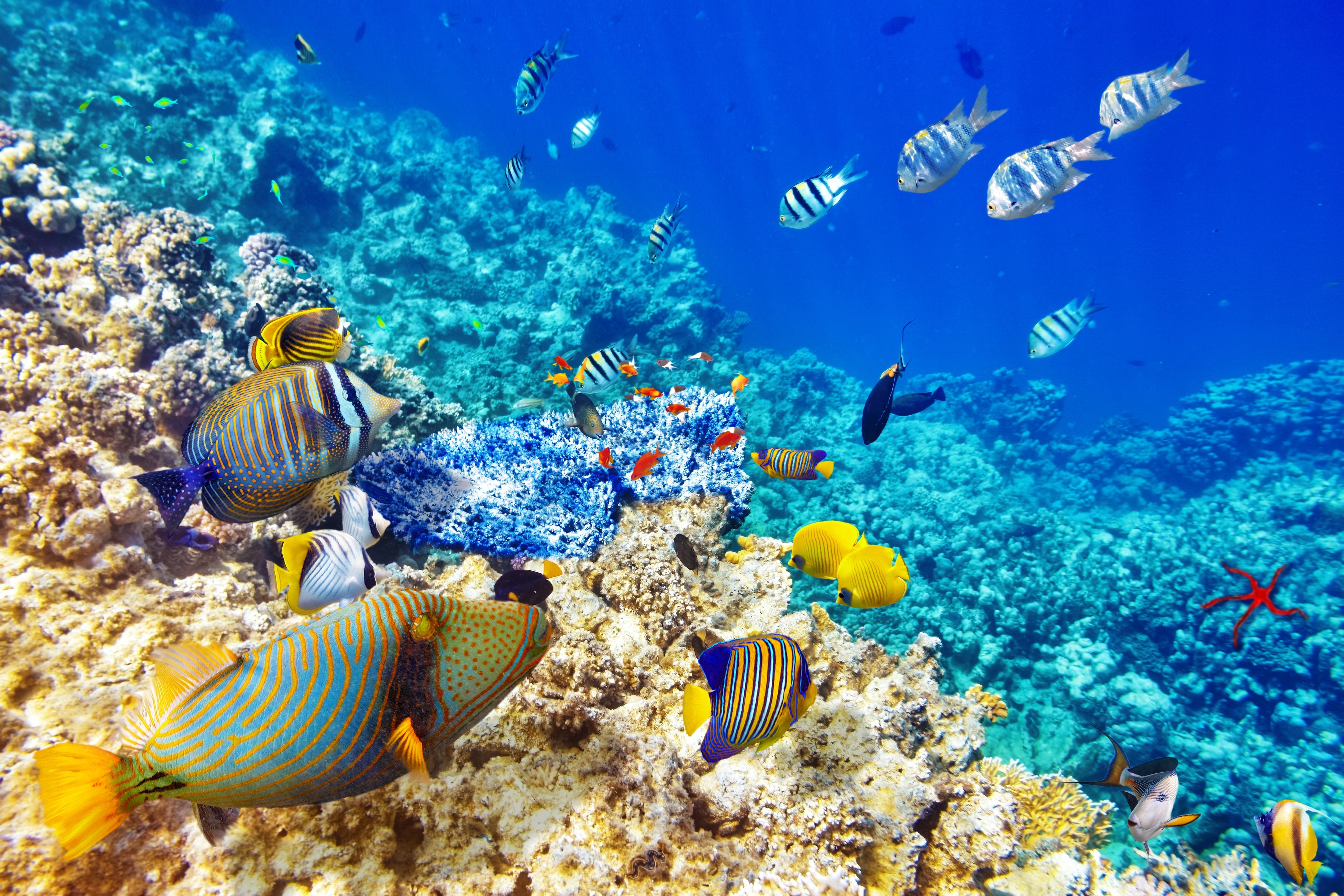 Wallpaper : animals, sea, underwater, coral reef, diving ... - photo#33