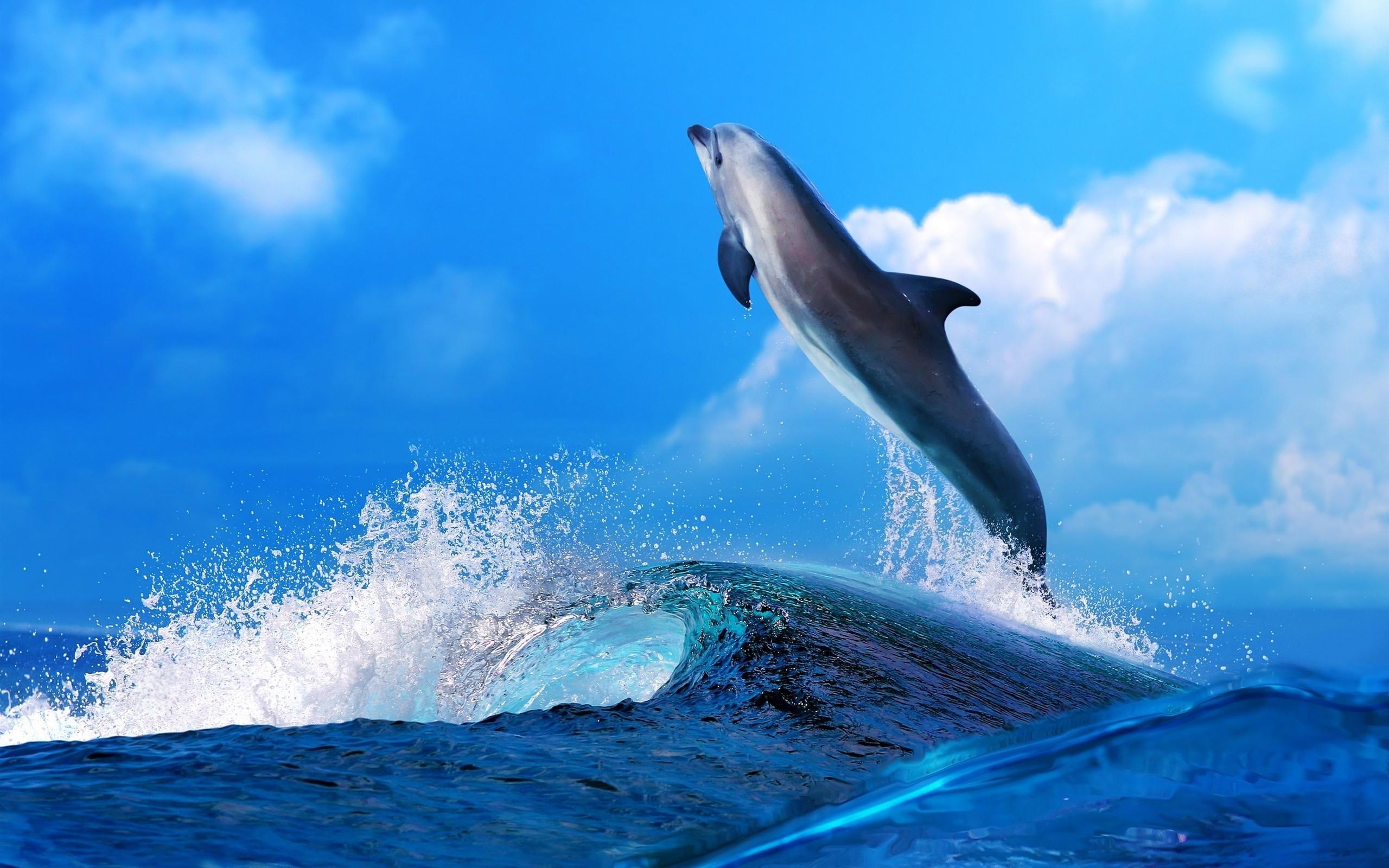 60 Gambar Hewan Ikan Paus Gratis