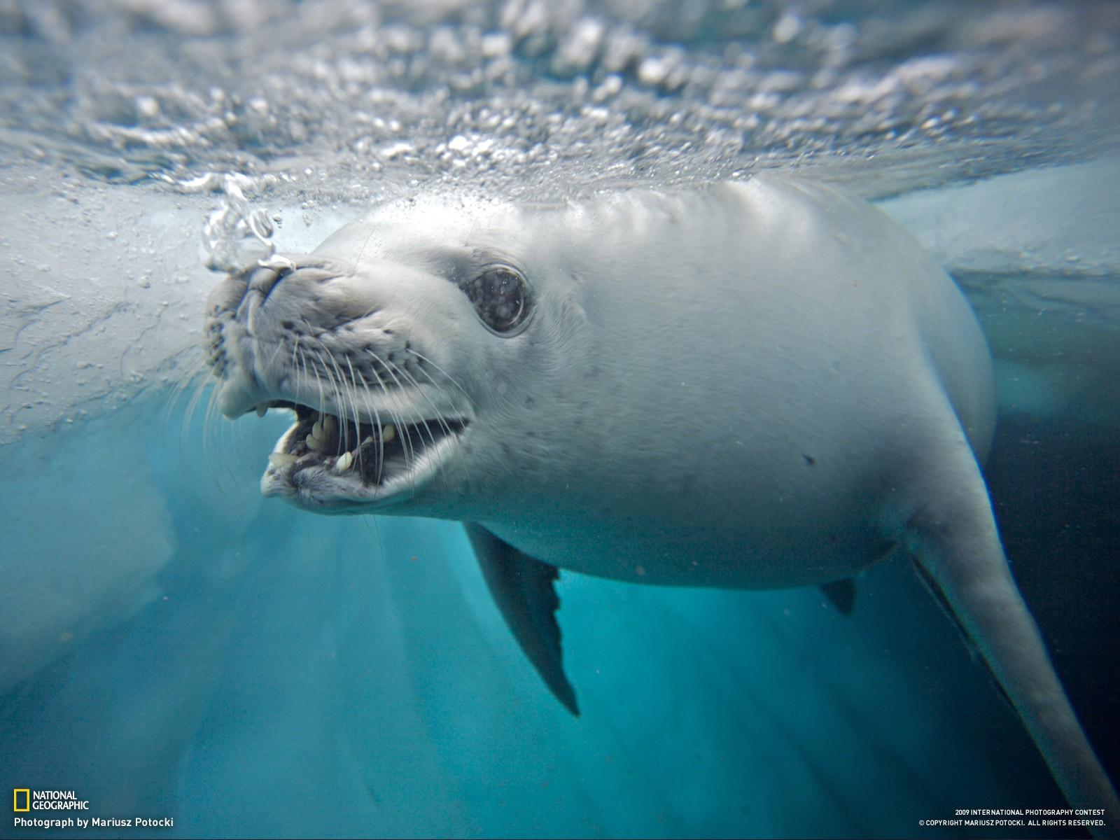 Meeressäugetier
