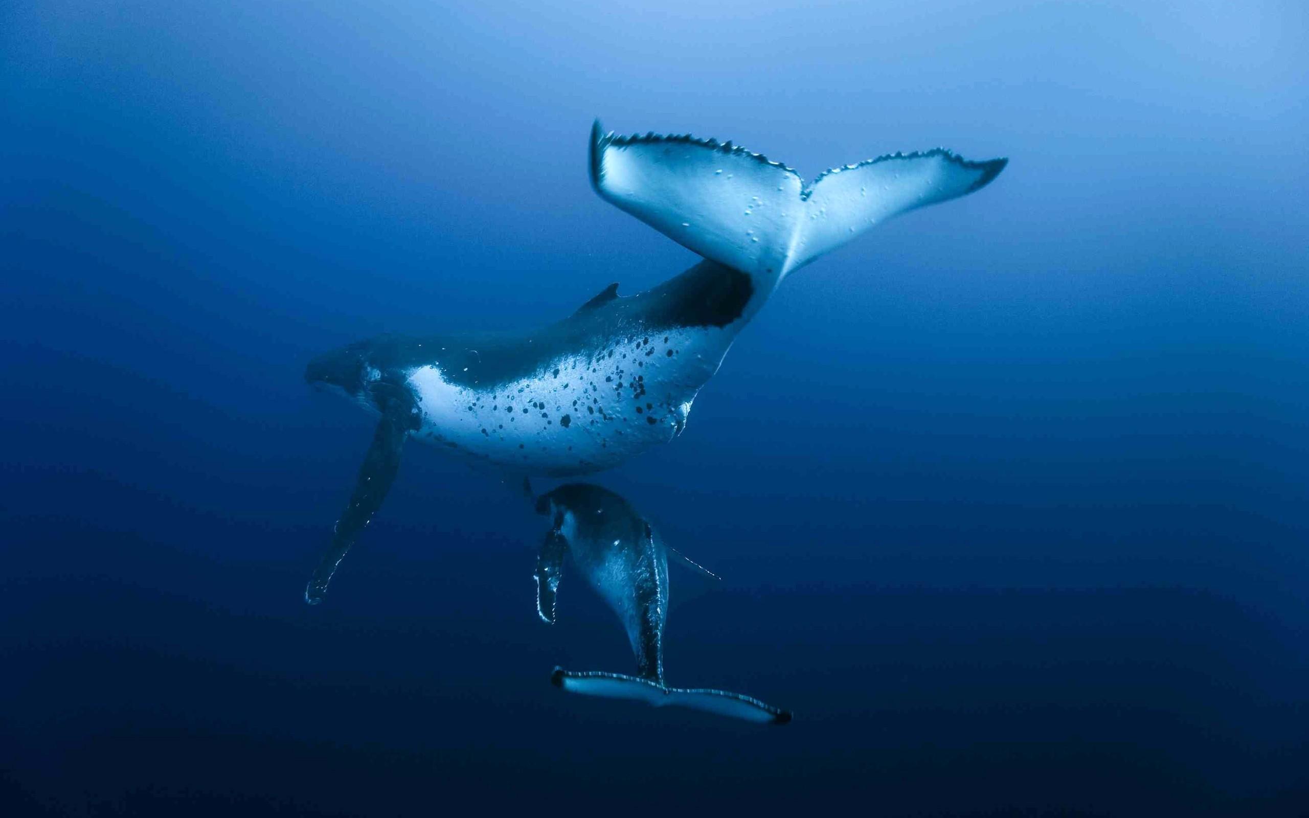 2560x1600 ocean sharks - photo #13
