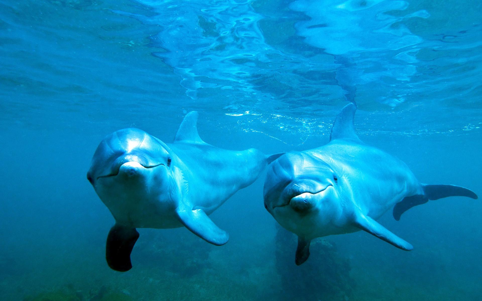 Wallpaper : animals, sea, water, nature, blue, underwater ...
