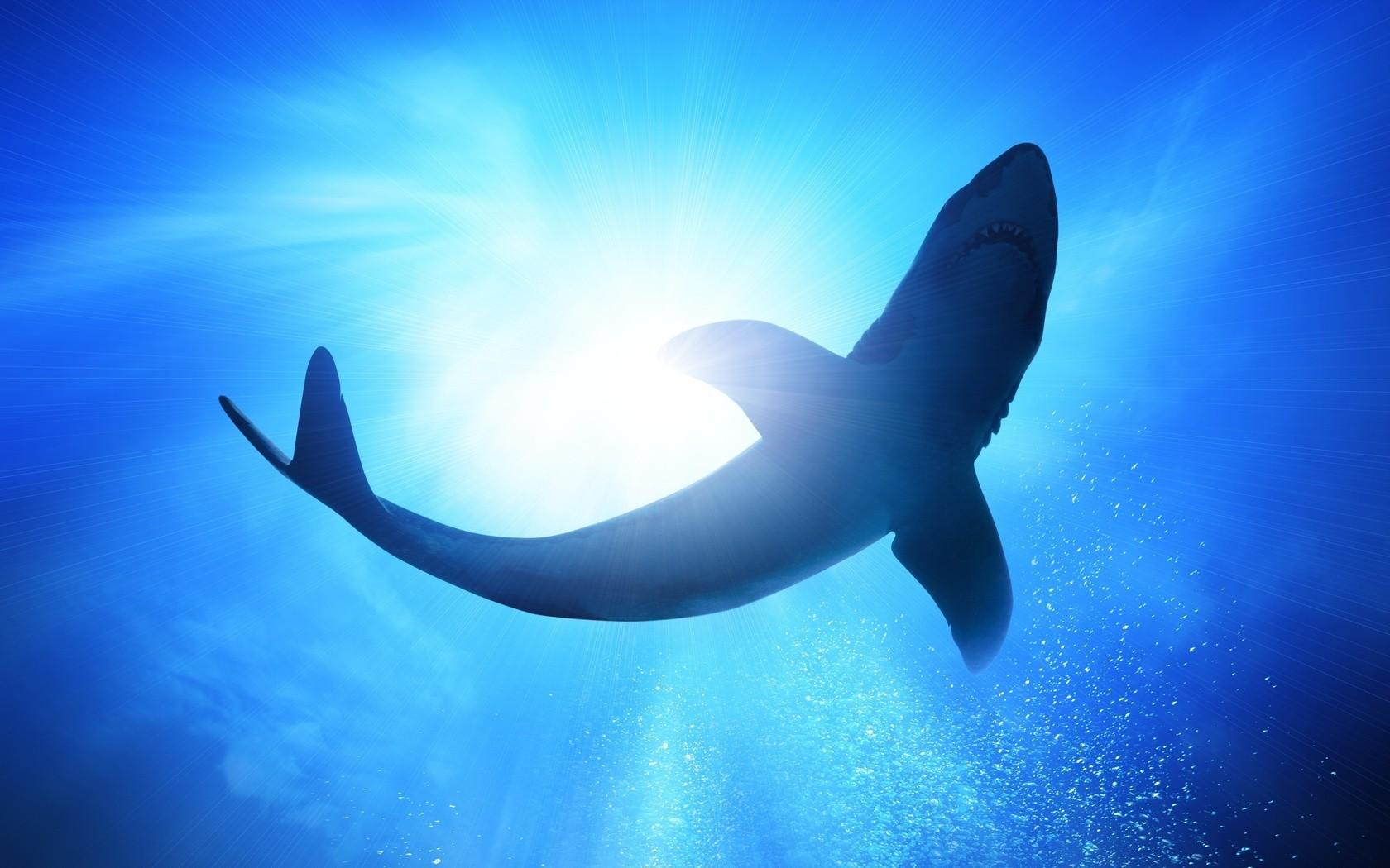 デスクトップ壁紙 鮫 青 水中 スティングレイ 翼 脊椎動物