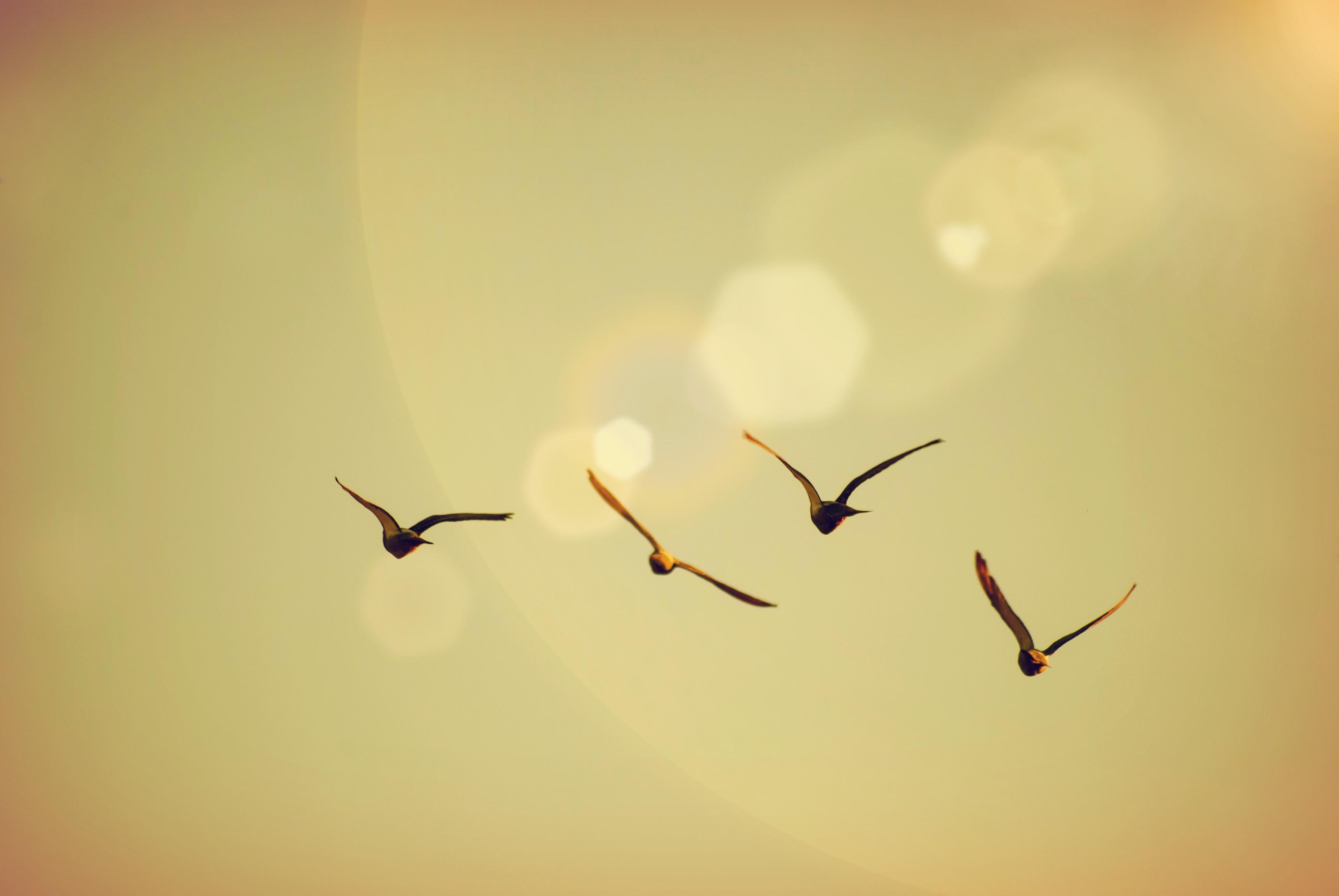 Wallpaper : animals, sunset, love, sky, sunrise, calm, Sun, life