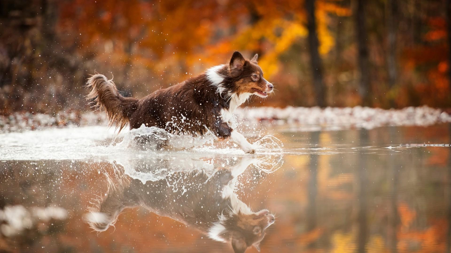 Fond d 39 cran animaux eau hiver chien faune for Fond ecran hiver animaux