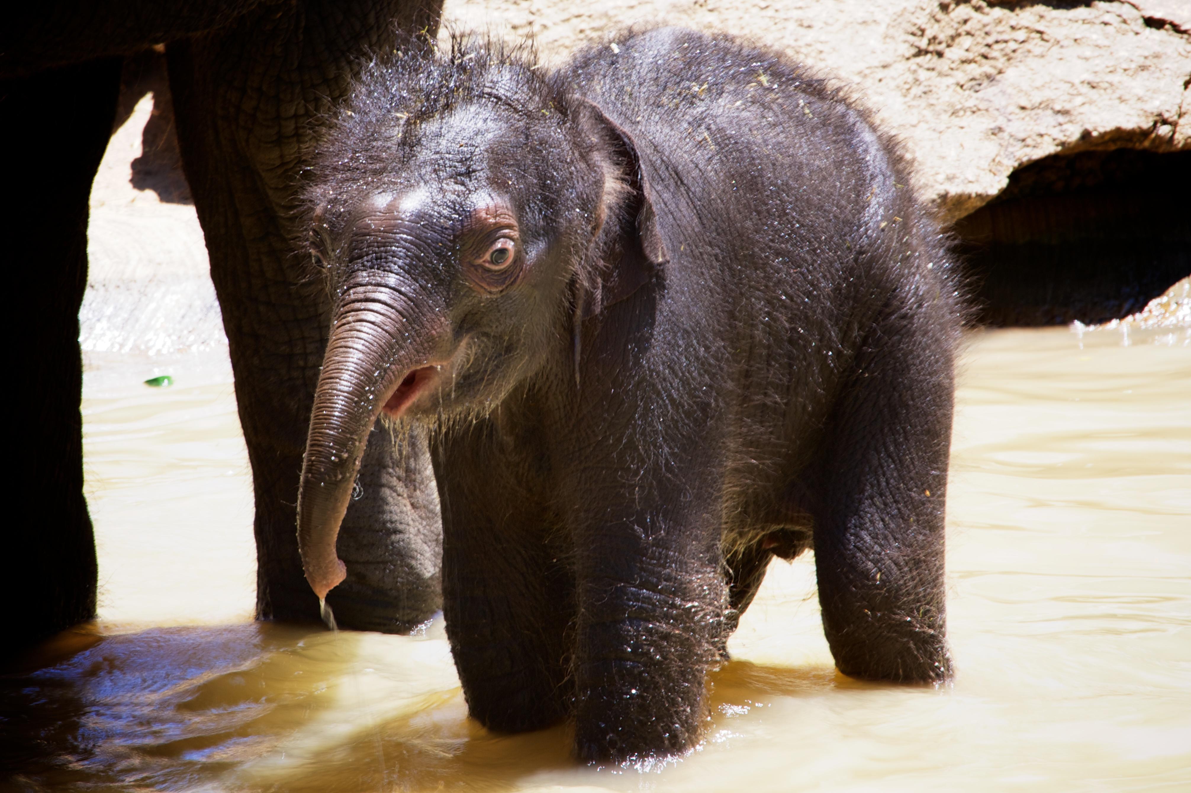 Fond D Ecran Animaux Faune Bebe Zoo Elephant