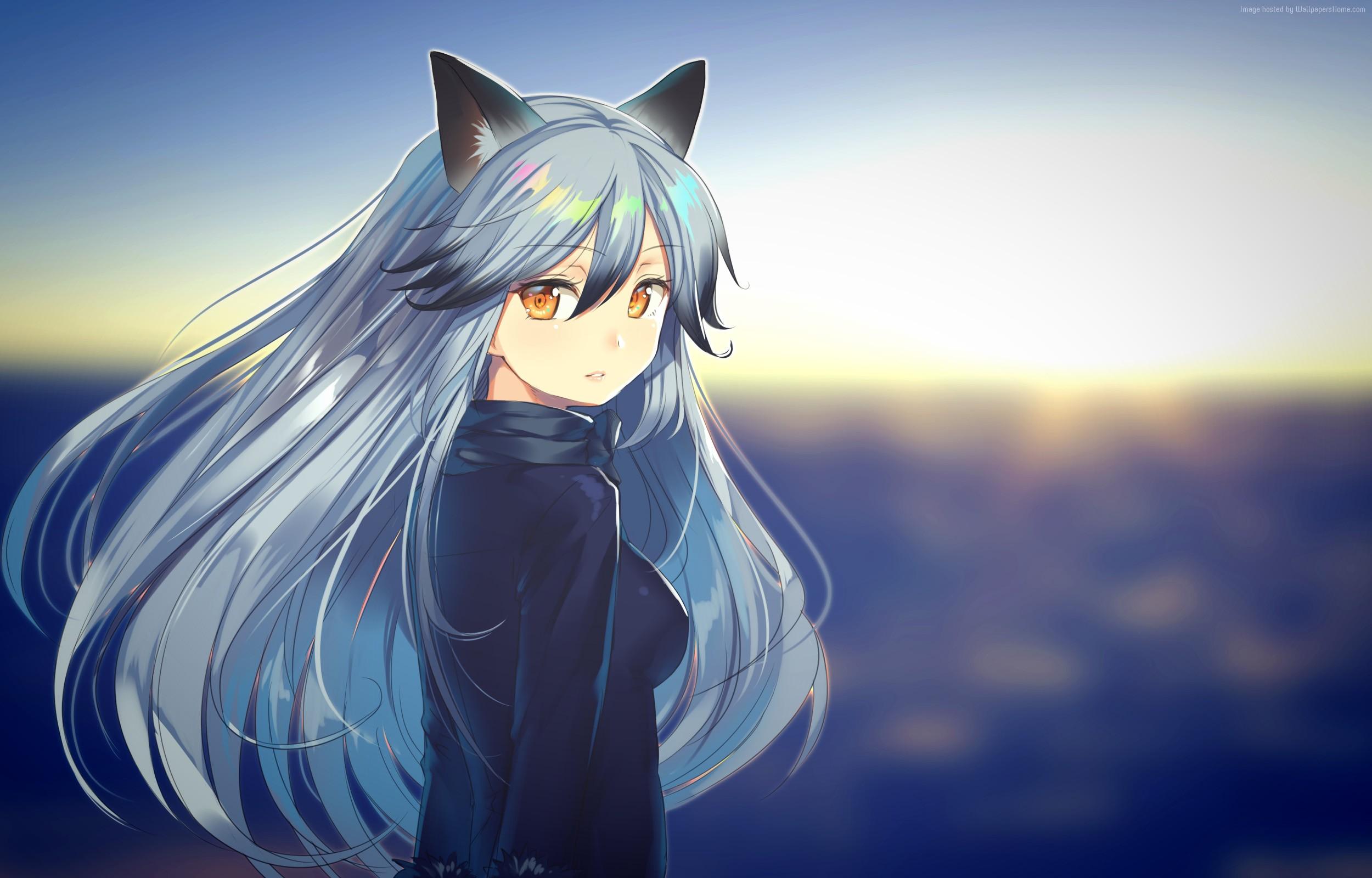 Wallpaper Anime Girls Kemono Friends Silver Fox Kemono