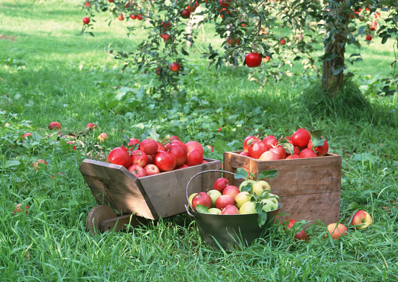 Осенний сад и огород россия картинки фото
