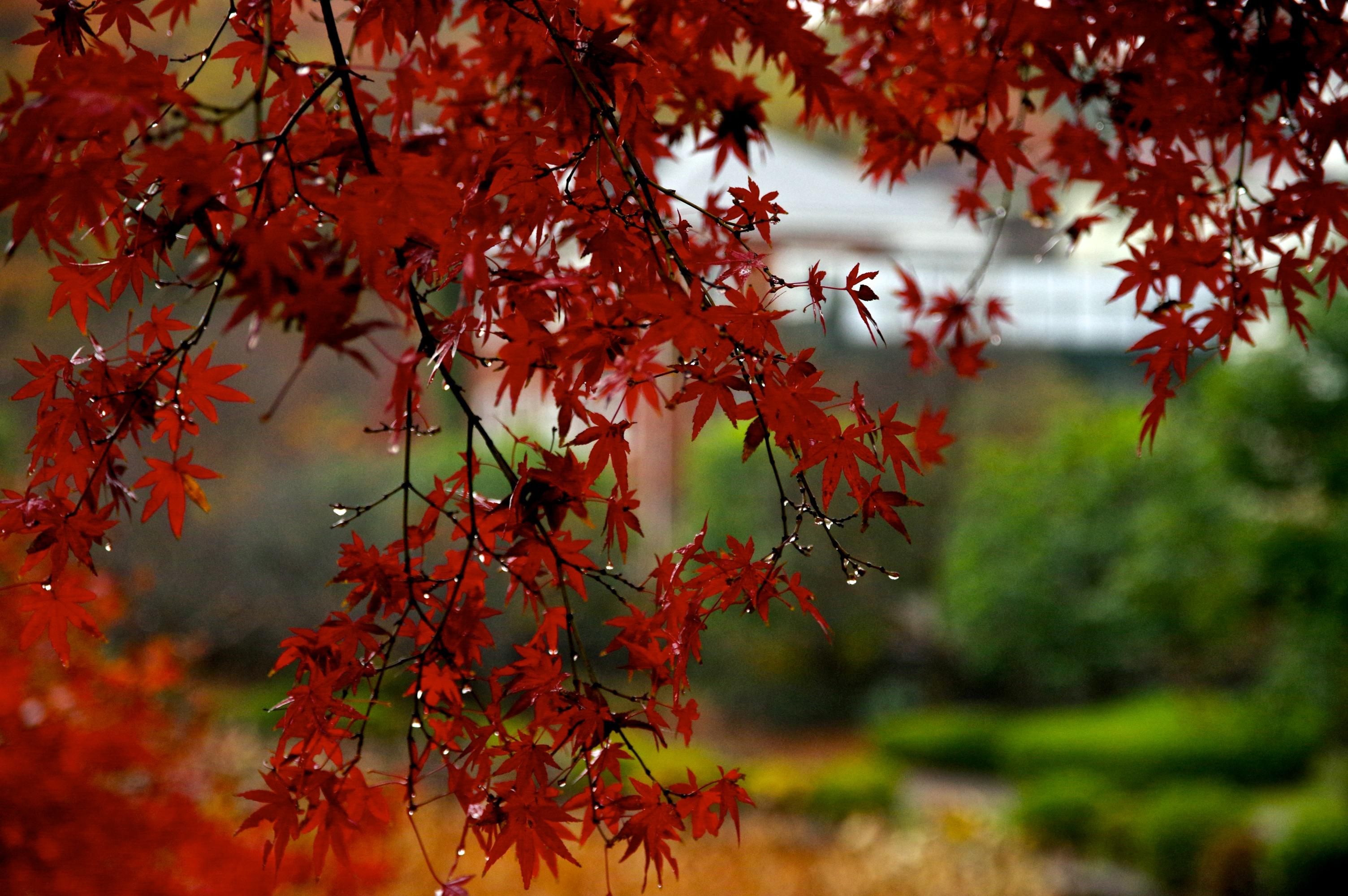Autumn Fall Water Leaves Rain Leaf Autum Pentax Sigma Rainy Pentaxart