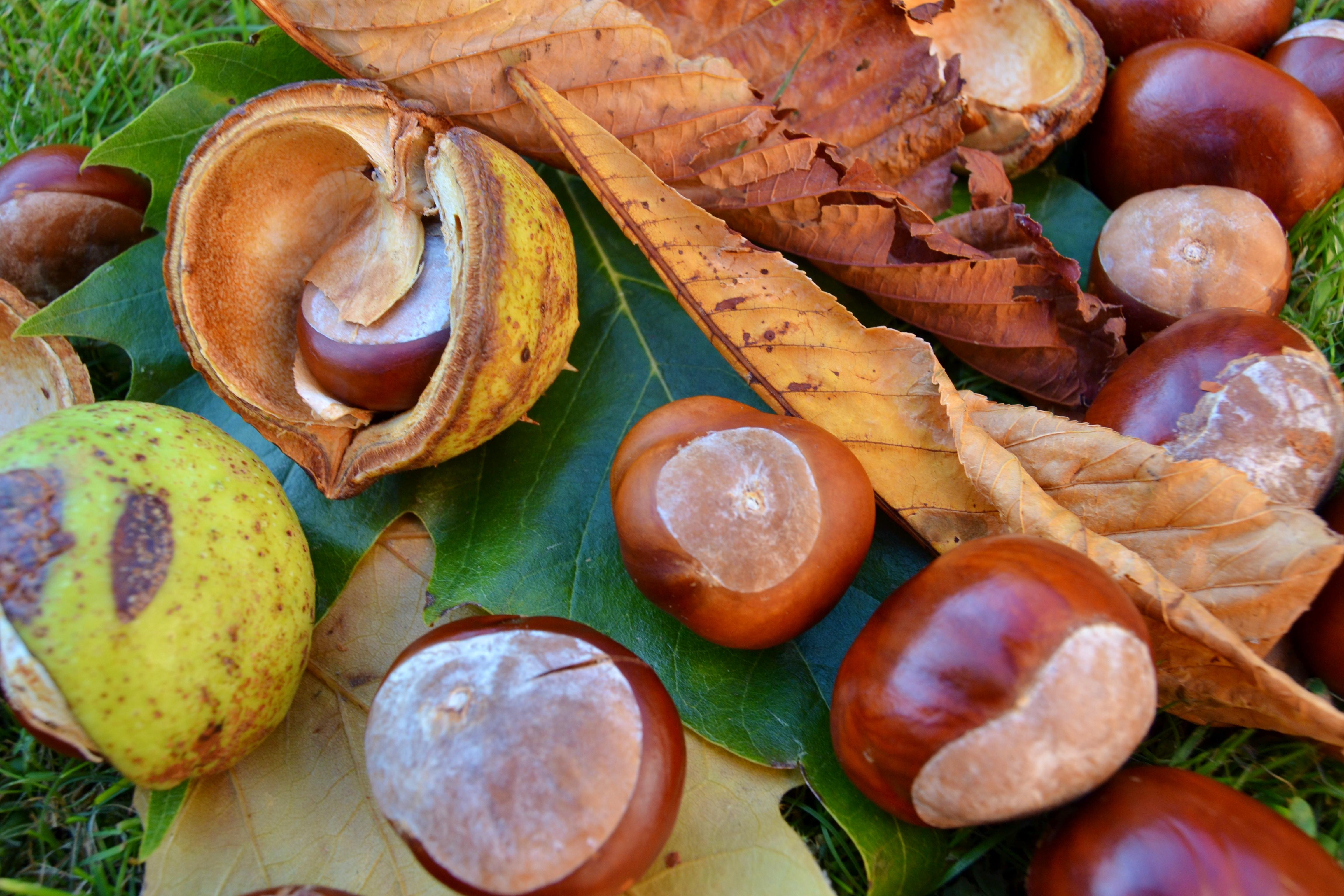 Hintergrundbilder : Herbst, Pferd, braun, Farbe, Grün, Blätter ...