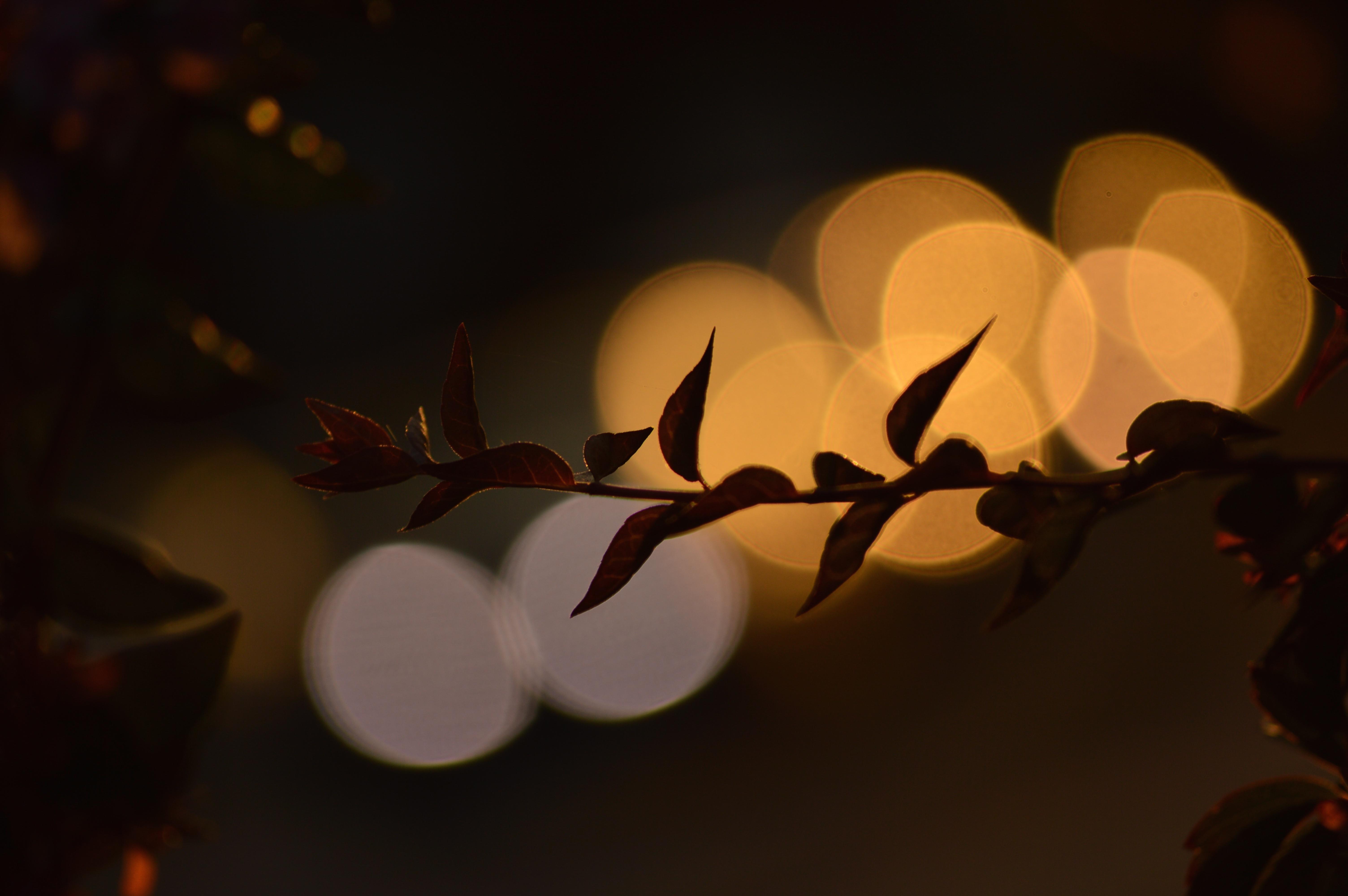 Beautiful Wallpaper Halloween Light - autumn-light-flower-fall-Halloween-nature-shadows-bokeh-pumpkins-nikond3200-oursecretgarden-1073128  Image_218299.jpg