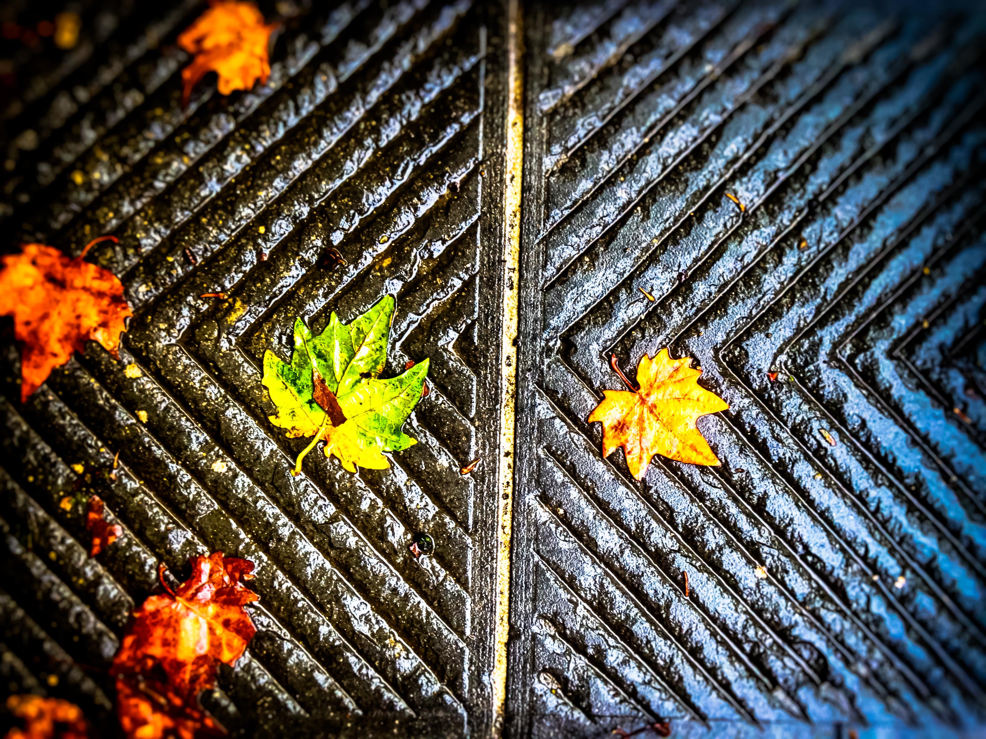 Wallpaper Autumn Summer Verde Green Apple Rain