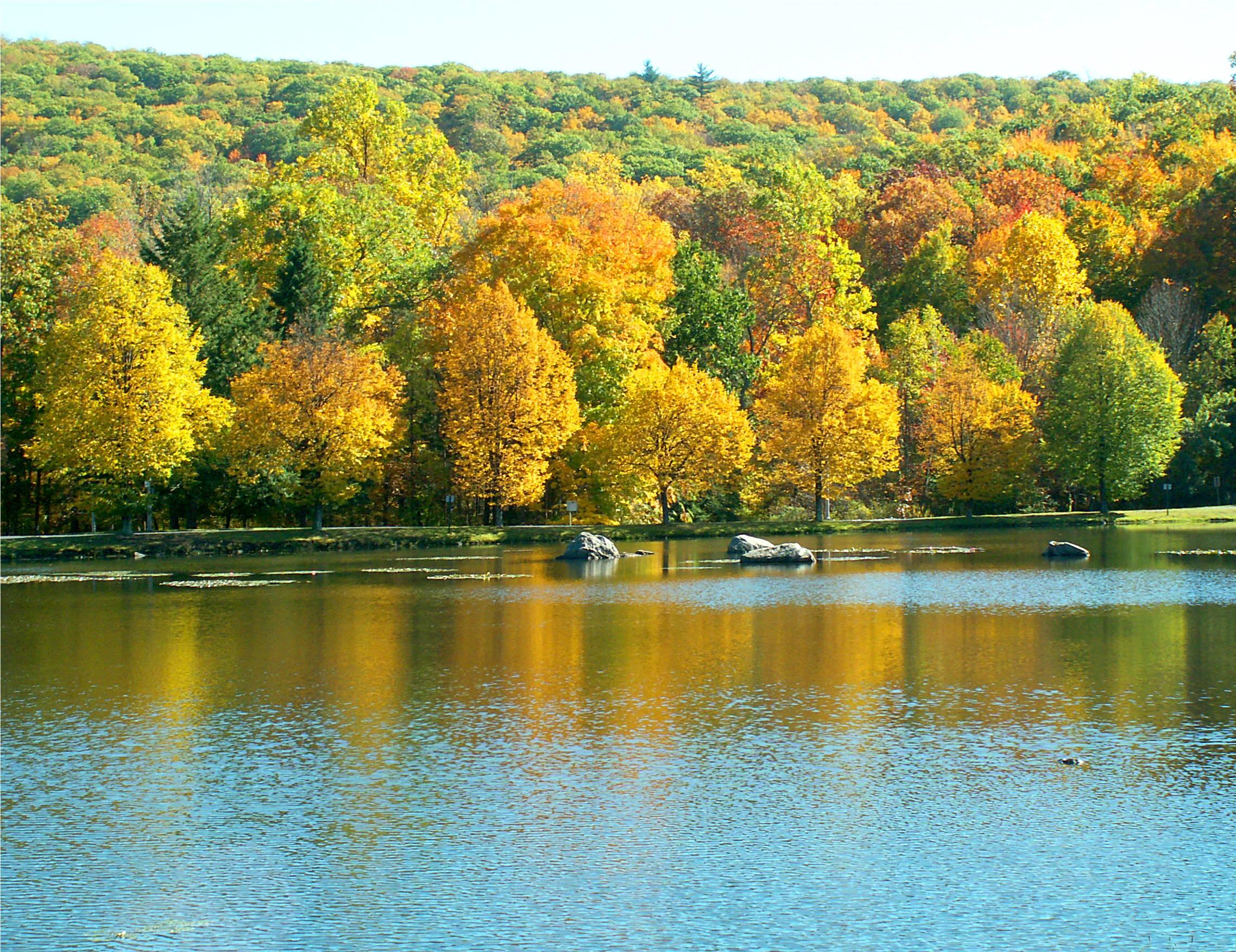 Fond d'écran : l'automne, des arbres, Couleur, réflexion ...