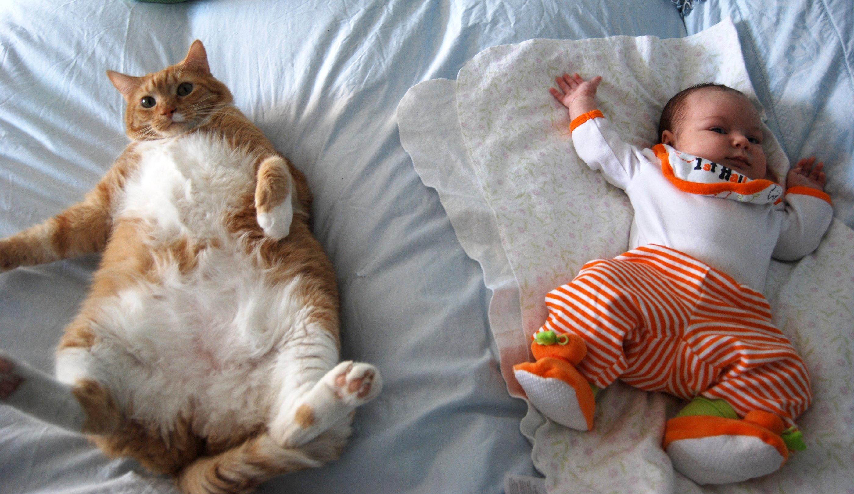 Фотогалерея - Кошки и дети - Забавные фото кошек - CATS -галерея 45