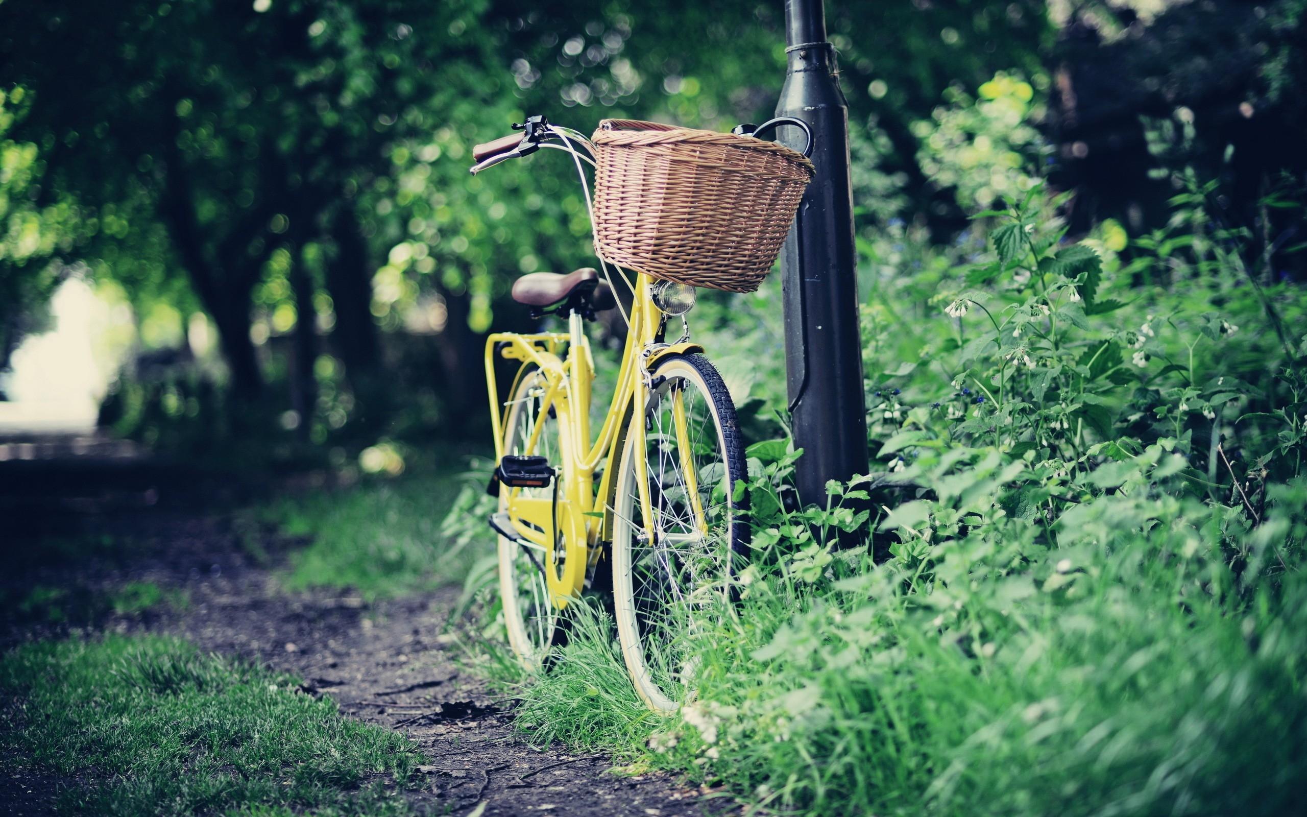 можете ознакомиться картинки з велосипедами тело позволяет