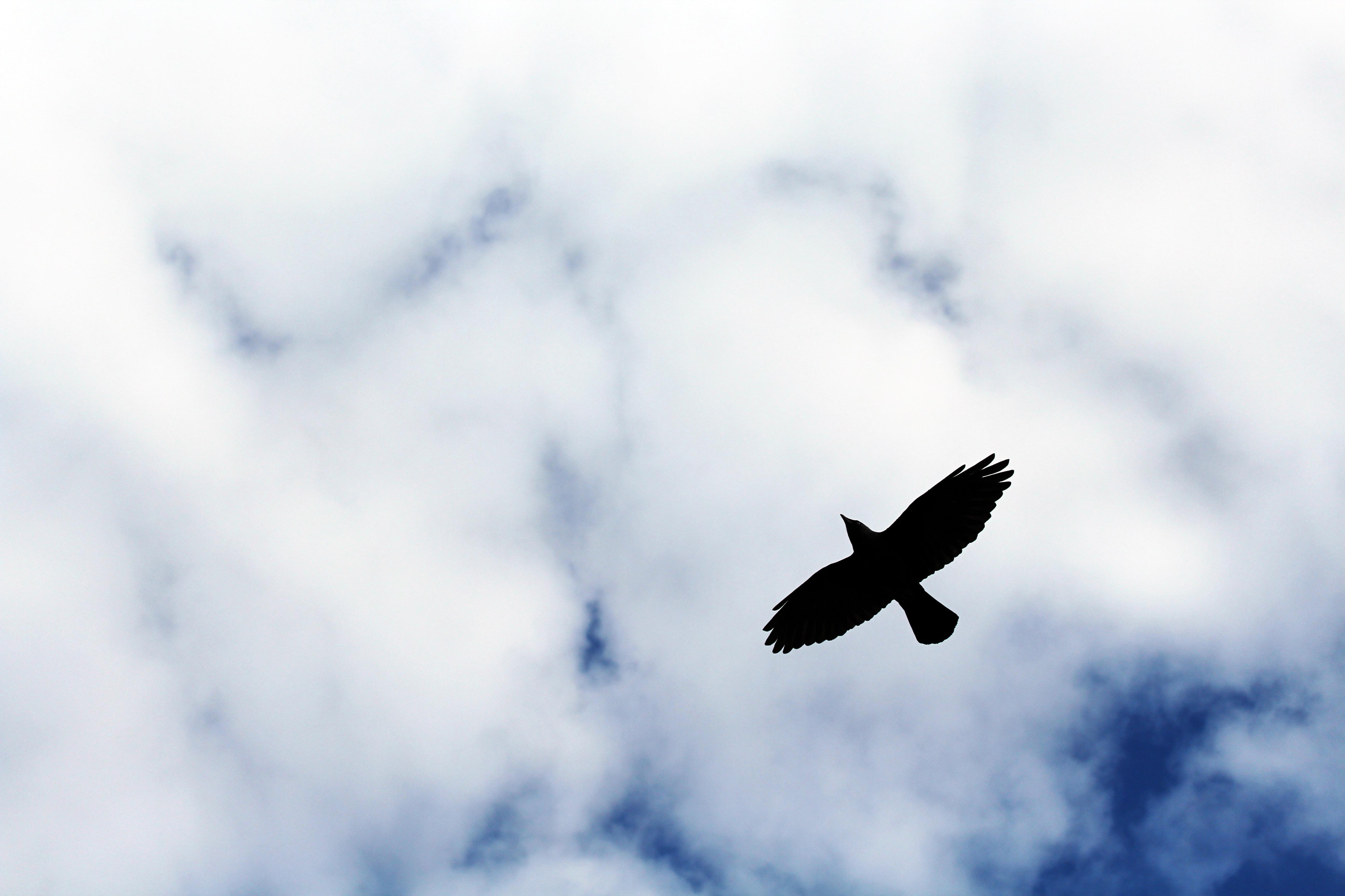 Птицы в небе картинки на рабочий стол