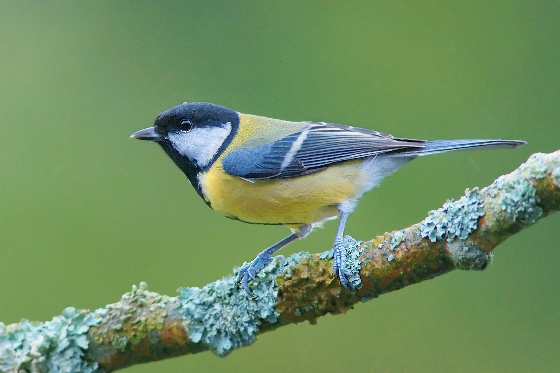 картинка птичка сидит мороз, отопление