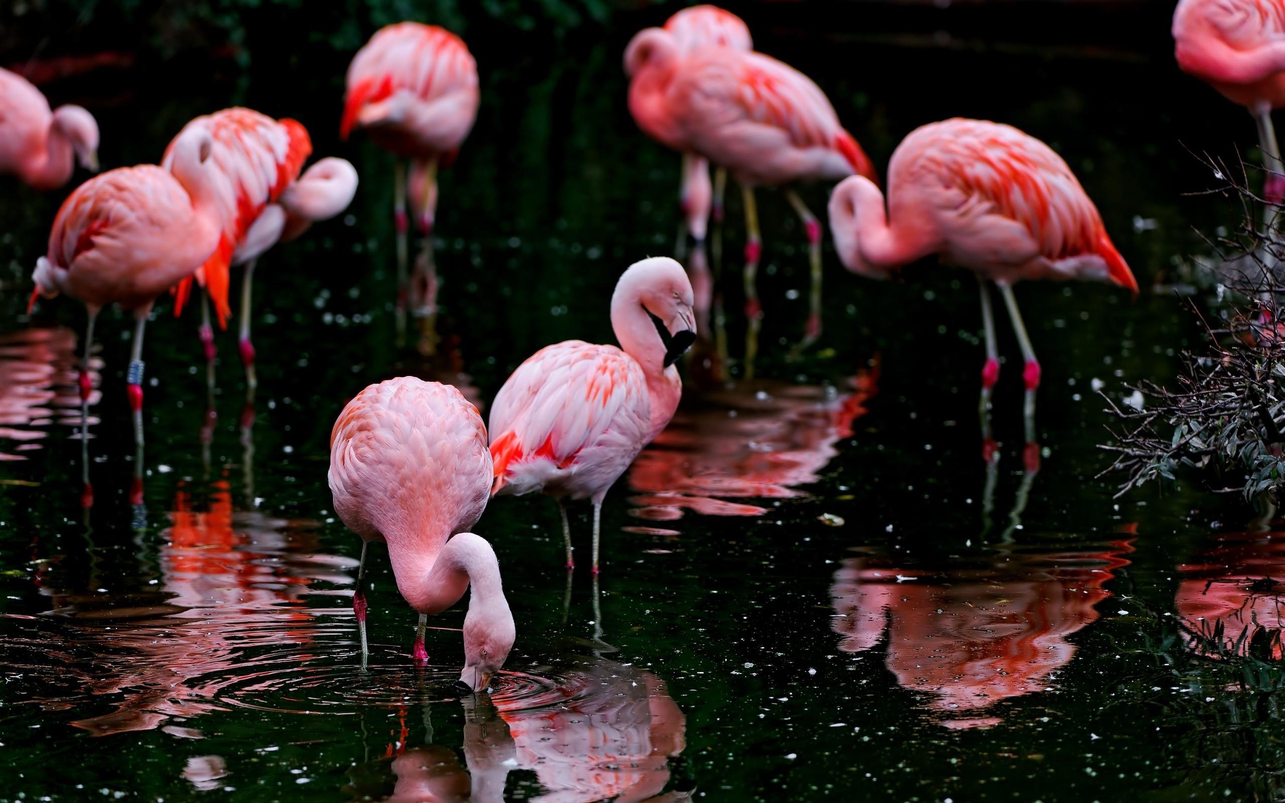 Wallpaper Burung Burung Hewan Kedalaman Lapangan Alam