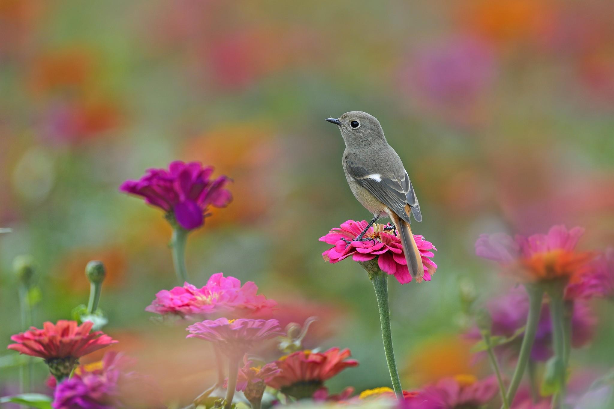 Wallpaper : birds, animals, flowers, nature, butterfly ...