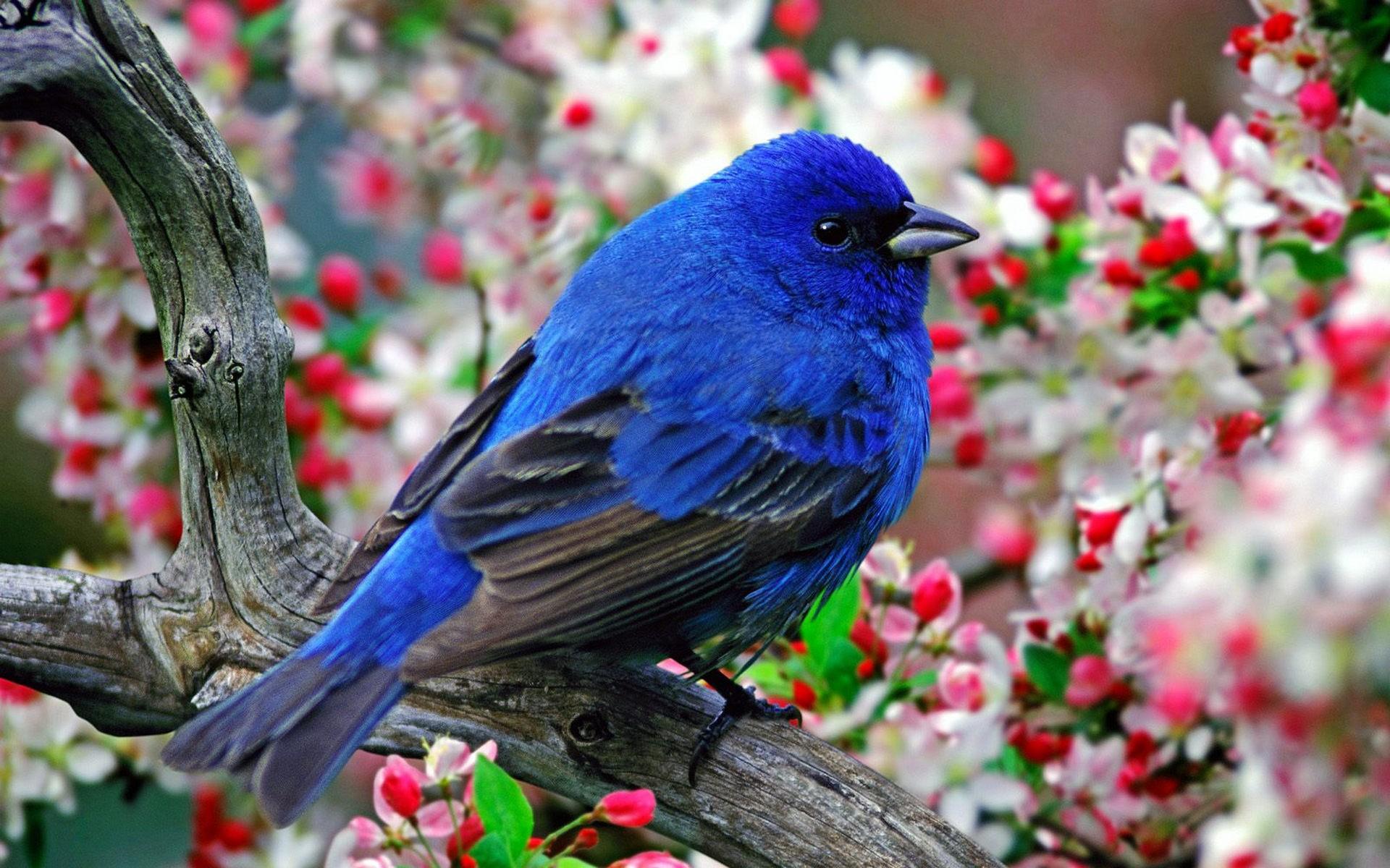 Обои на рабочий стол весна природа птицы и звери