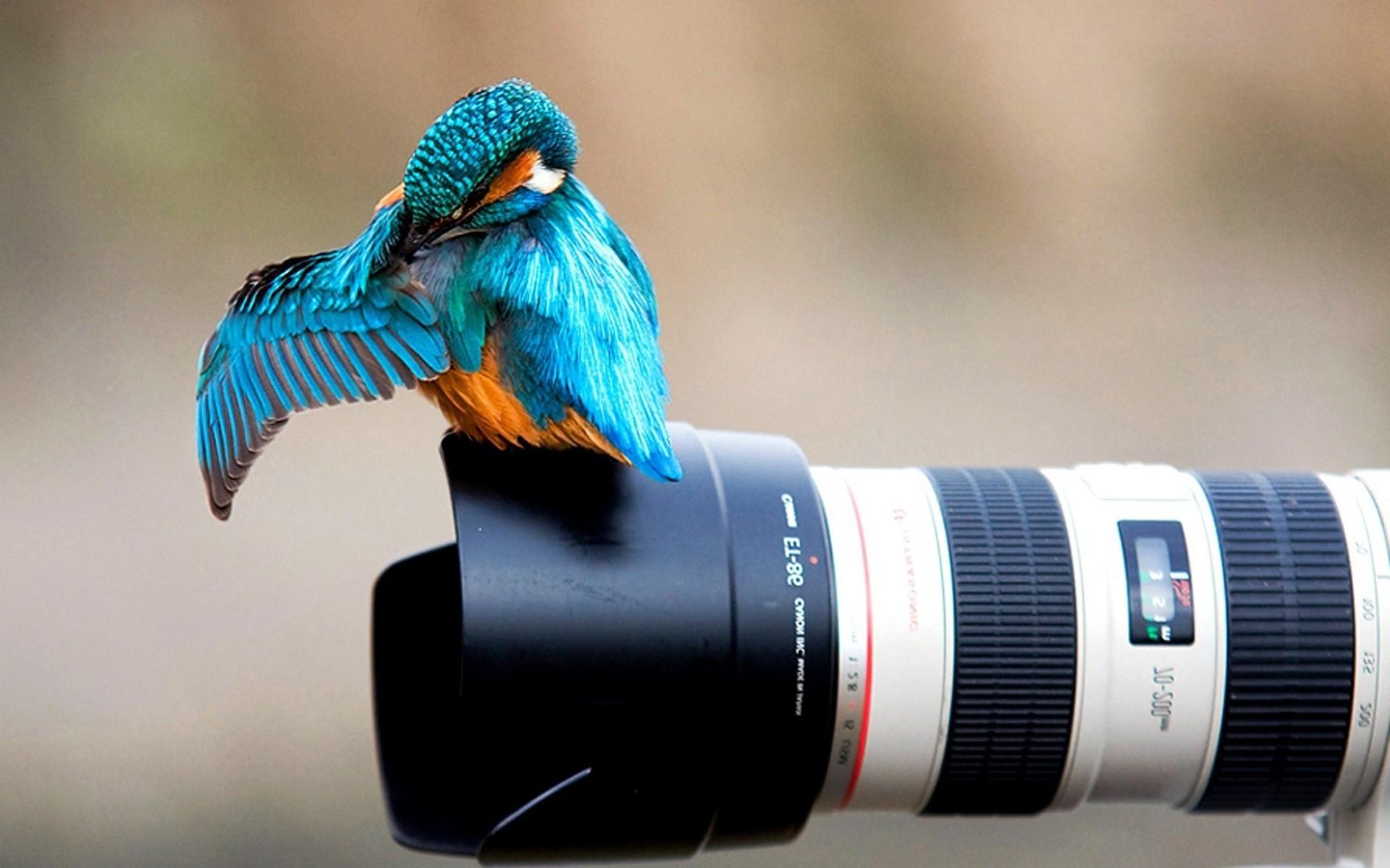 Birds Animals Nature Camera Blue Canon Kingfisher Beak Bird Wing 1920x1200 Px