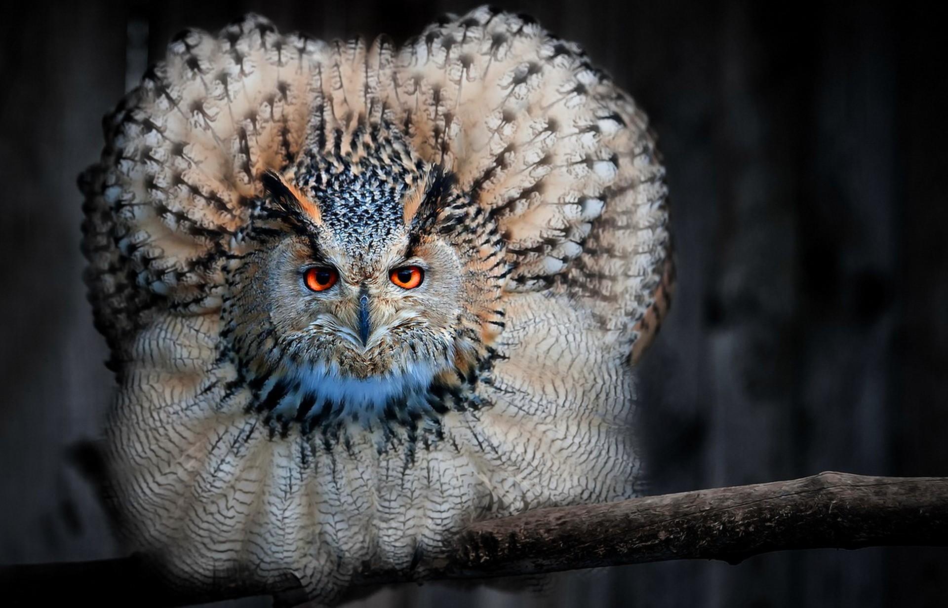 vtáky fotografie