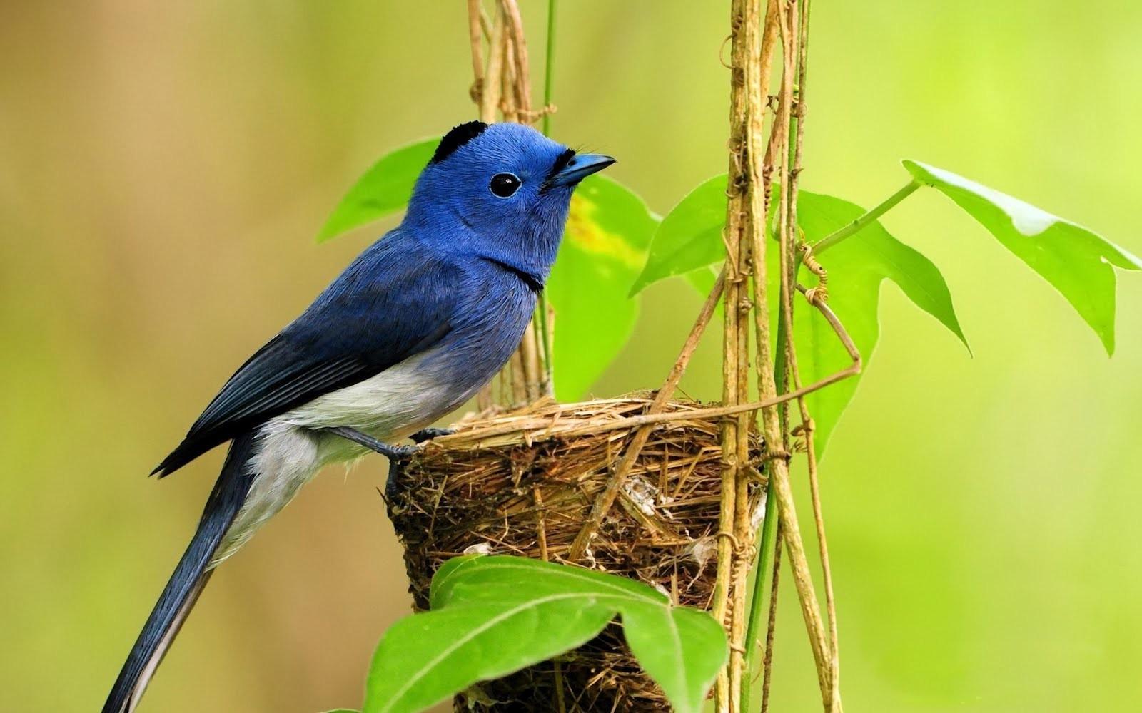 Obrázky, ak vtáky