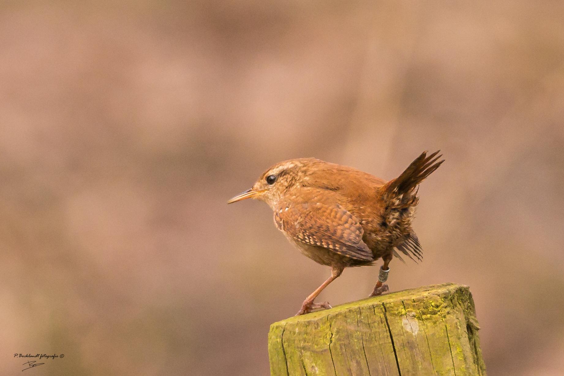 Fond d 39 cran des oiseaux animaux la nature faune la for Oiseaux des jardins belgique