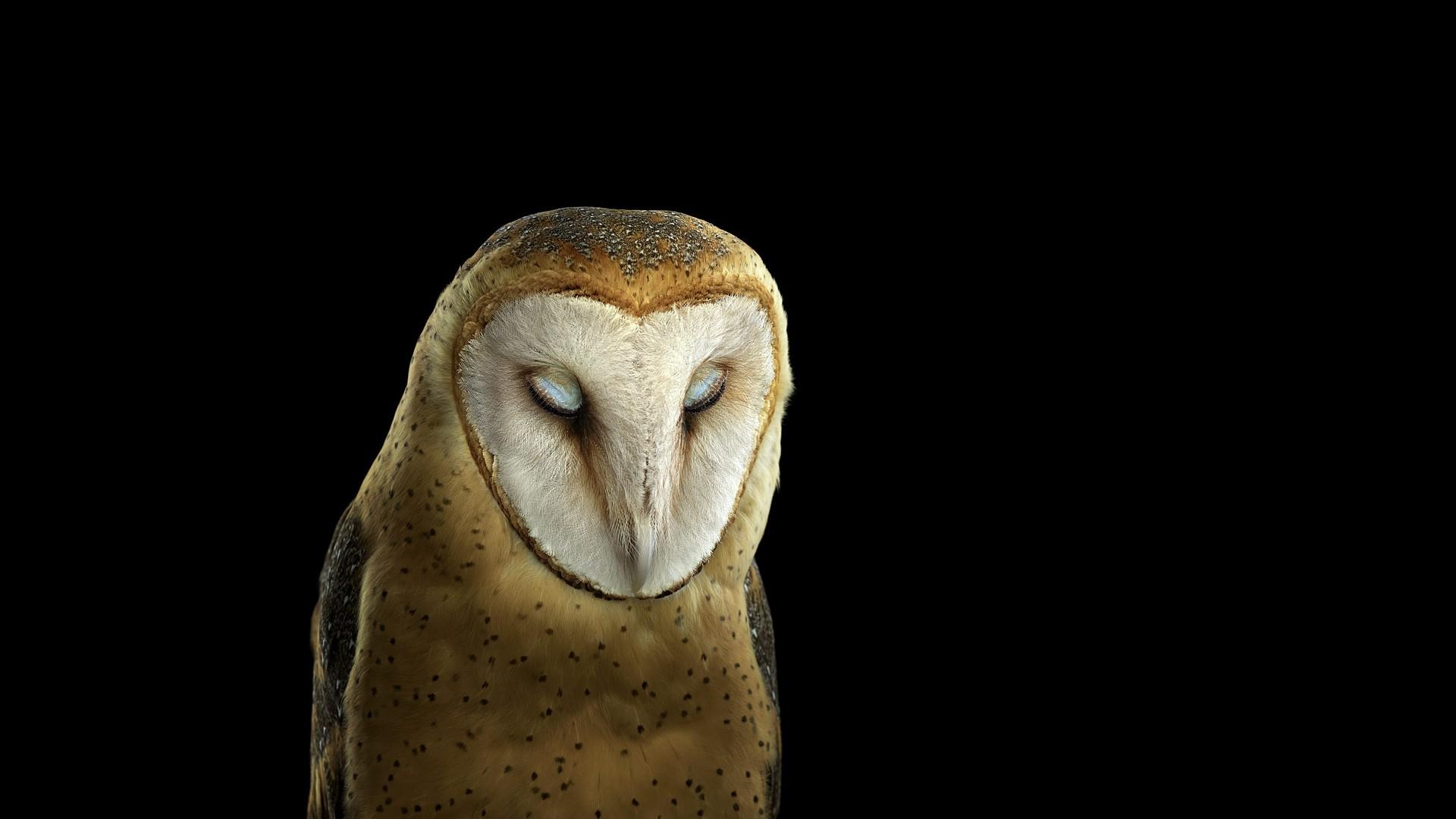 7500 Wallpaper Kepala Burung Hantu HD