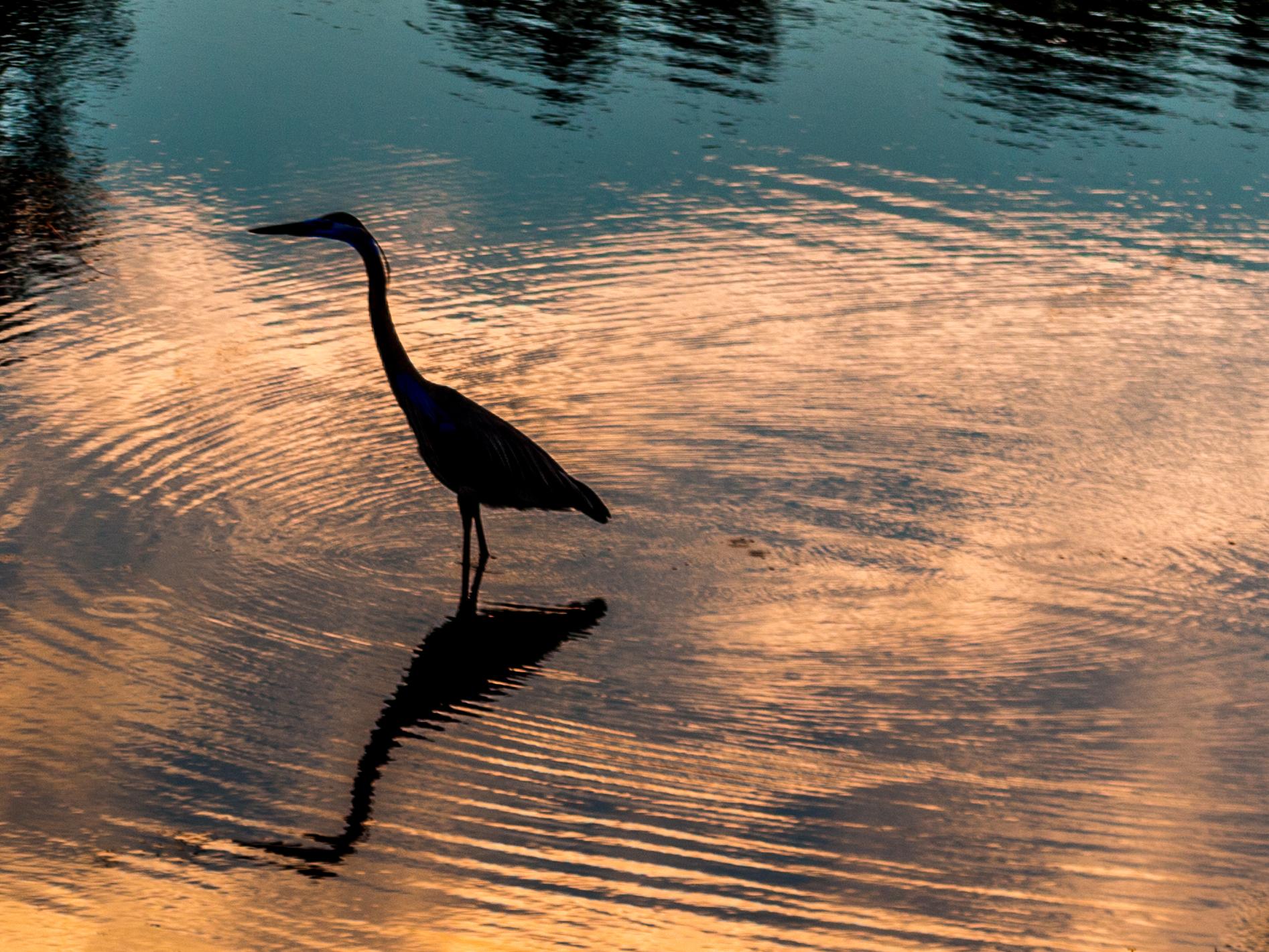 Wallpaper : birds, animals, sunset, sea, lake, reflection
