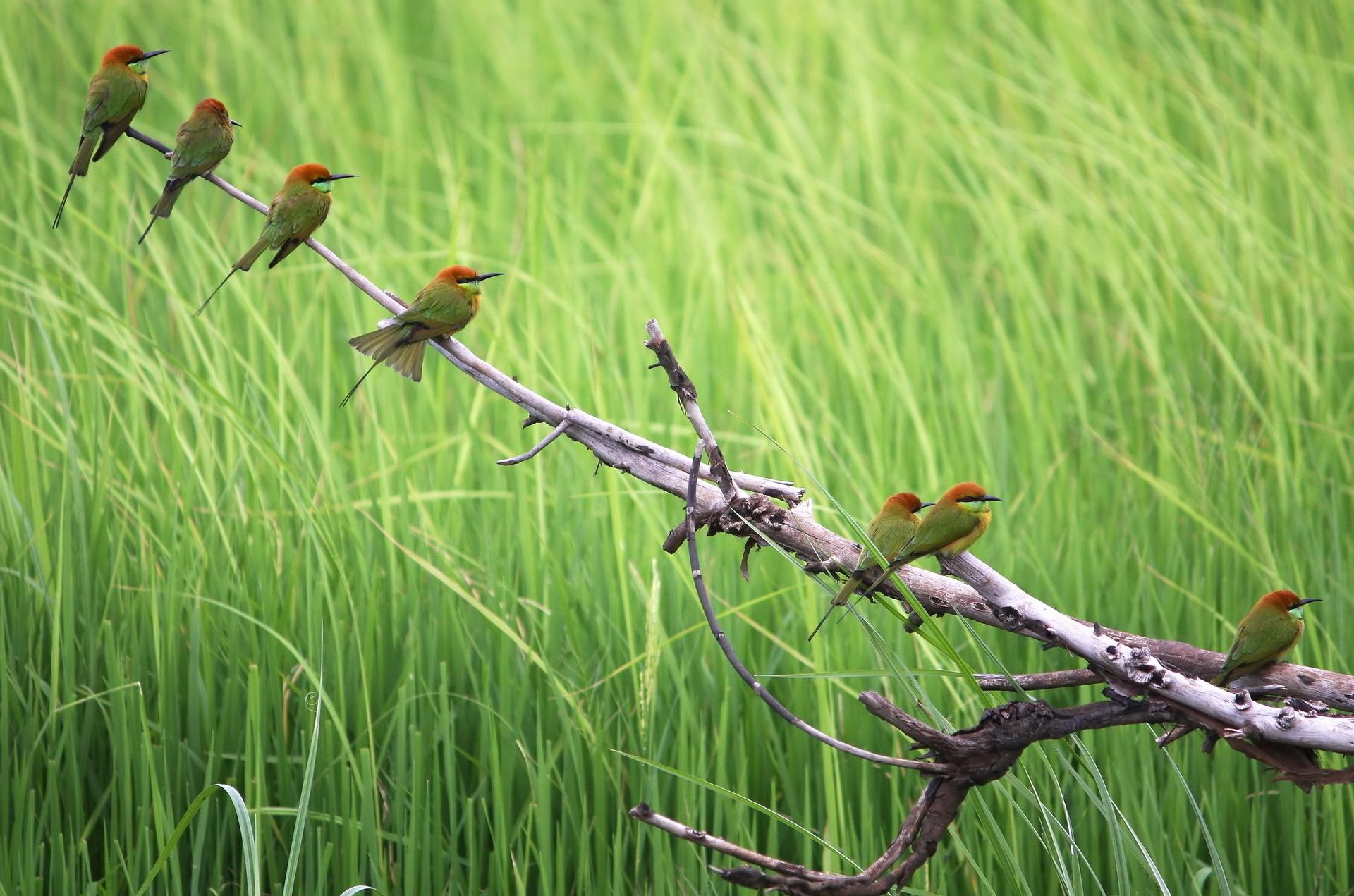 фотографии после картинка поляна птиц природа