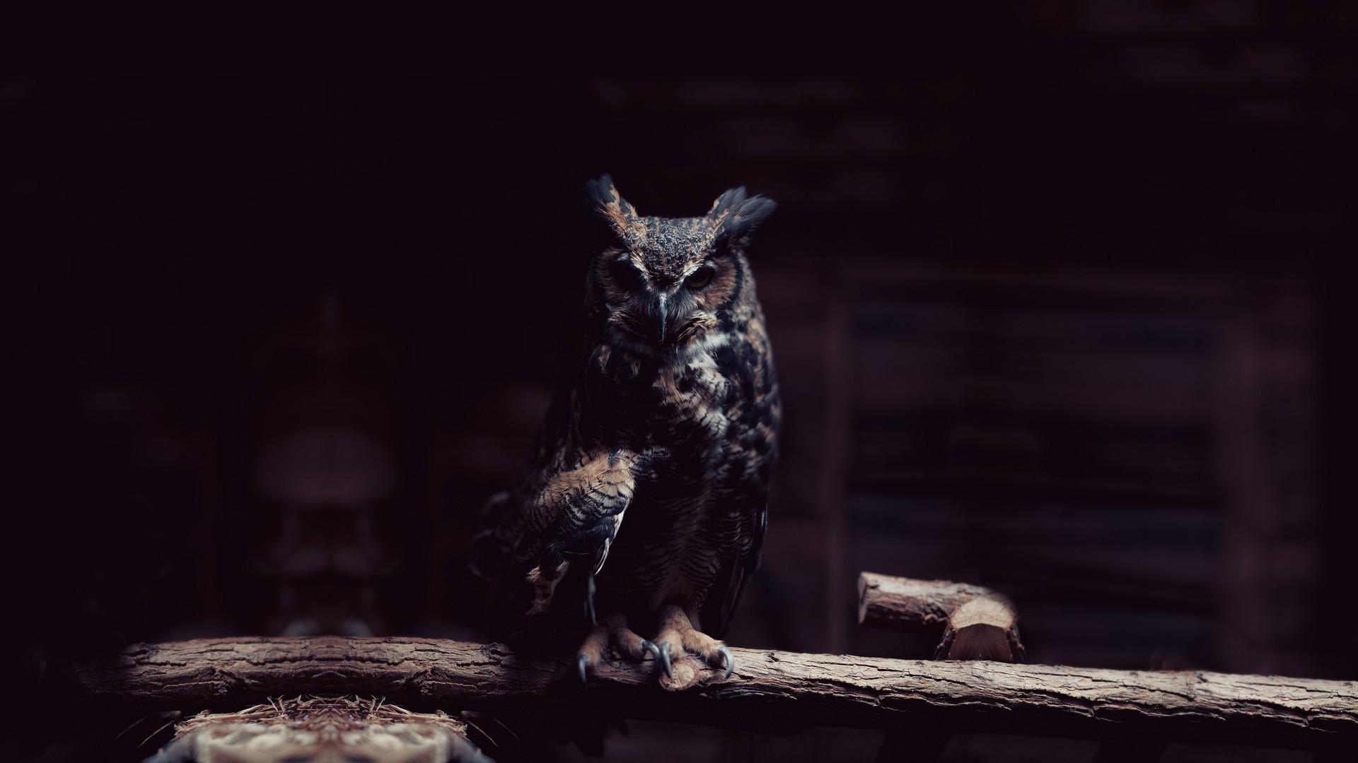 7400 Koleksi Wallpaper Burung Hantu Keren Hd HD Terbaik