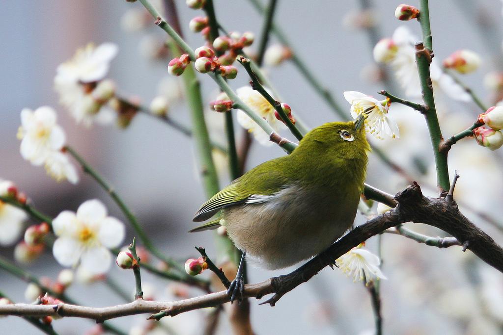 Fond d'écran : des oiseaux, fleurs, jardin, la nature ...