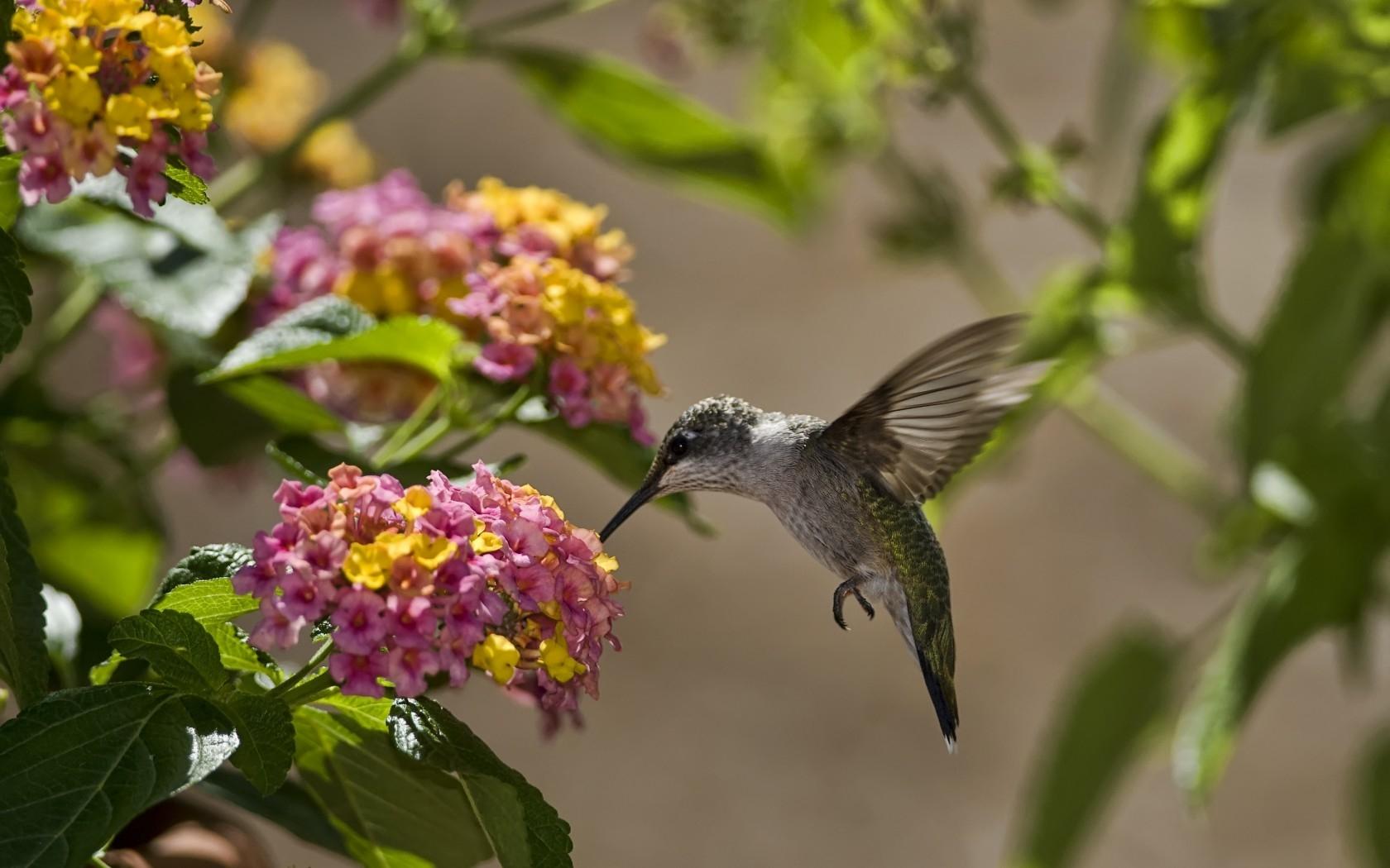 Картинки цветы с птицами
