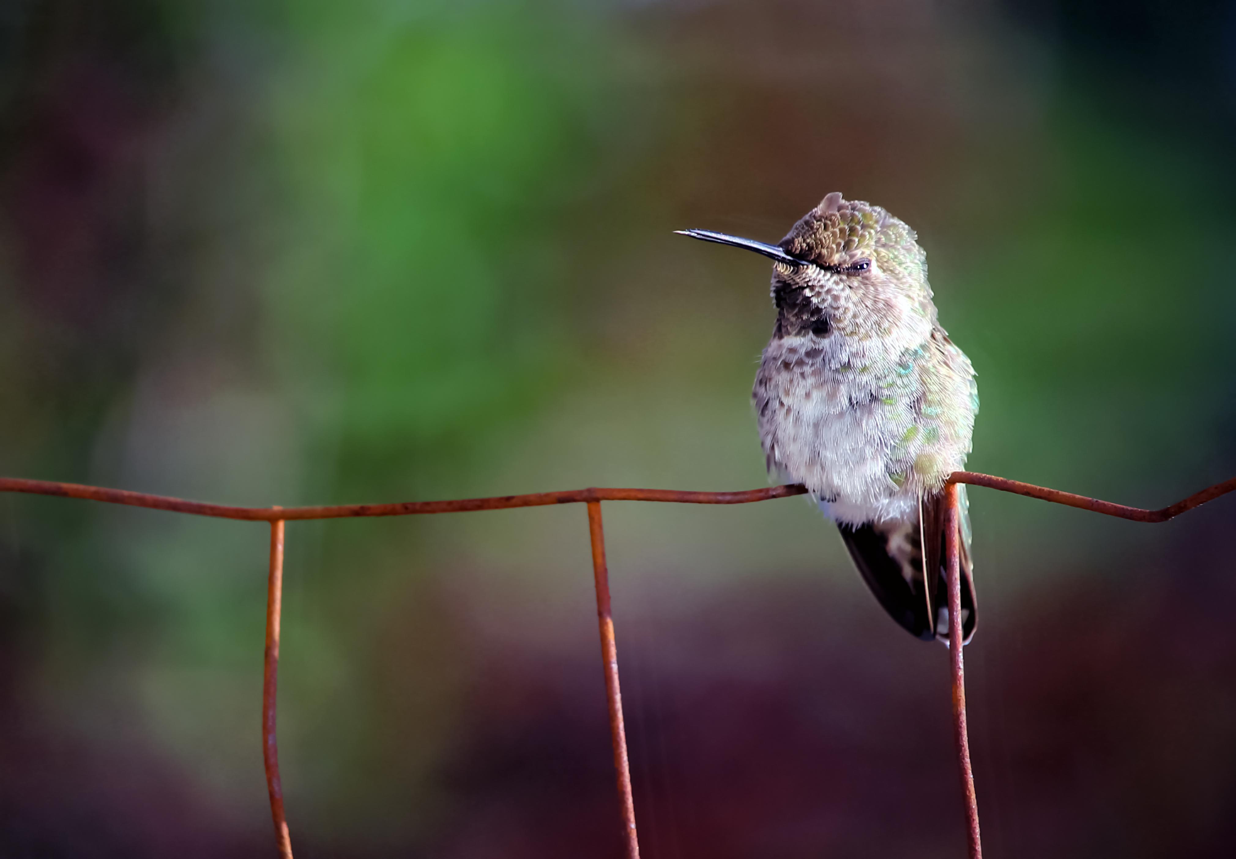 Φωτογραφίες πουλίμαύρο λεσβιακό σεξ vedio