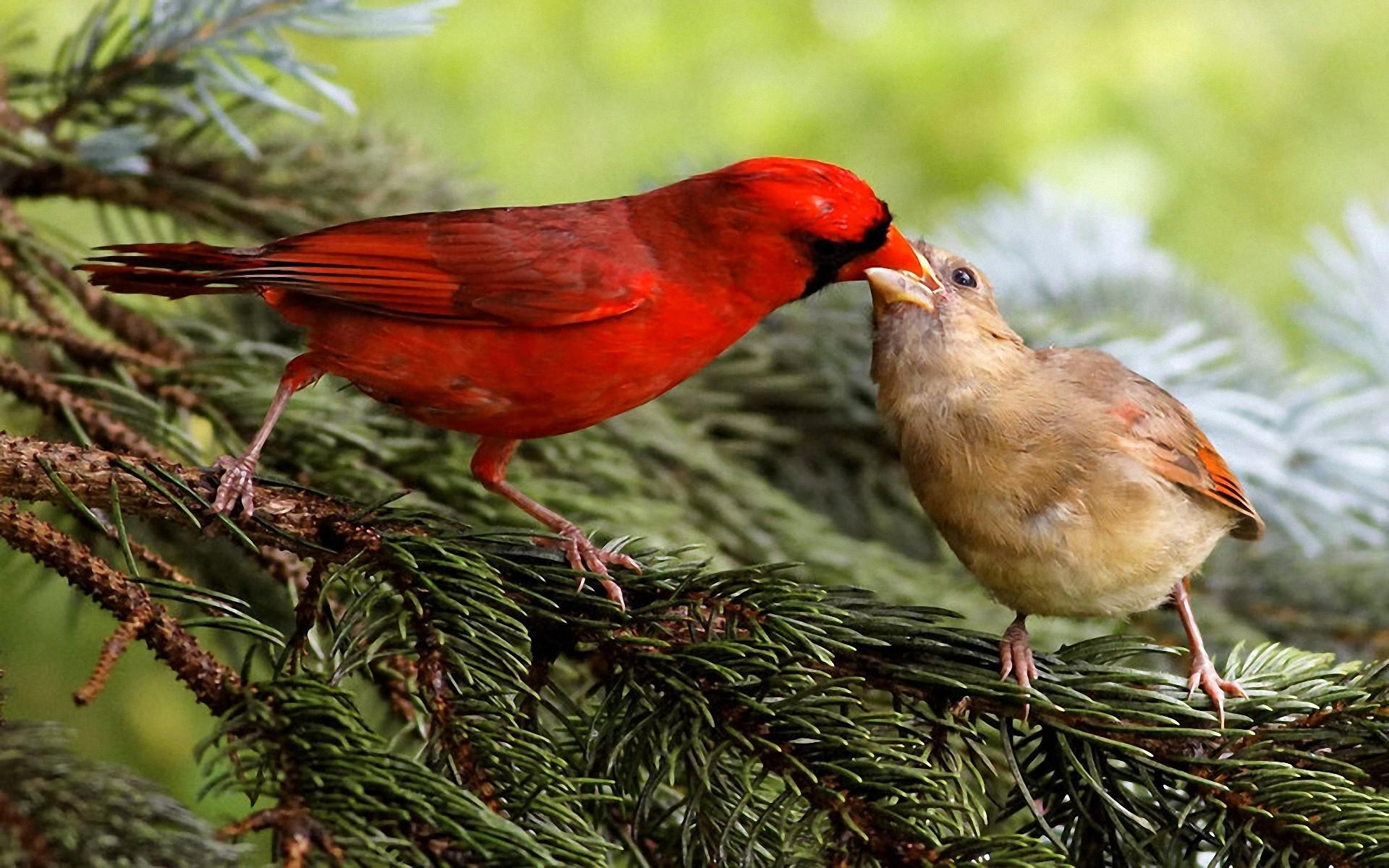 должен обладать посмотреть фото животных и птиц образование выпуклое, имеет