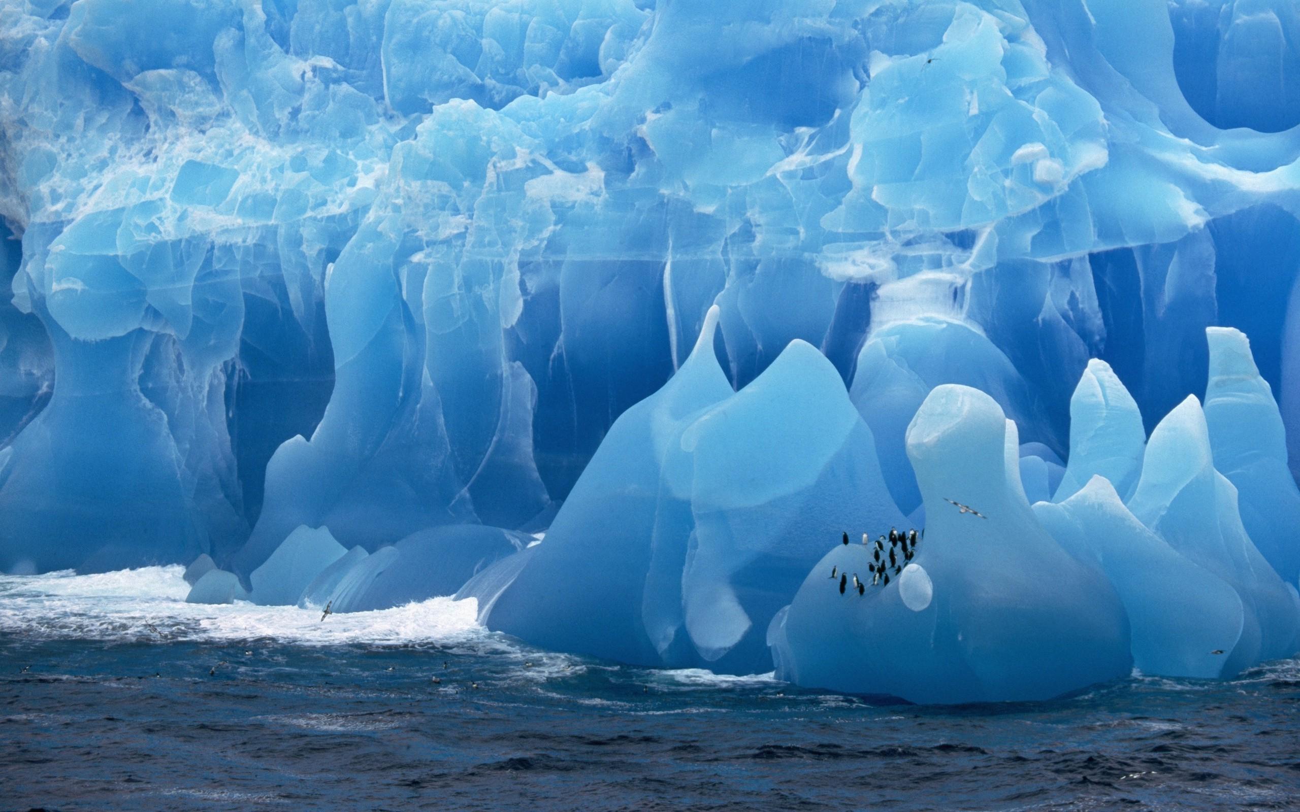 если картинка с надписью антарктида или иначе