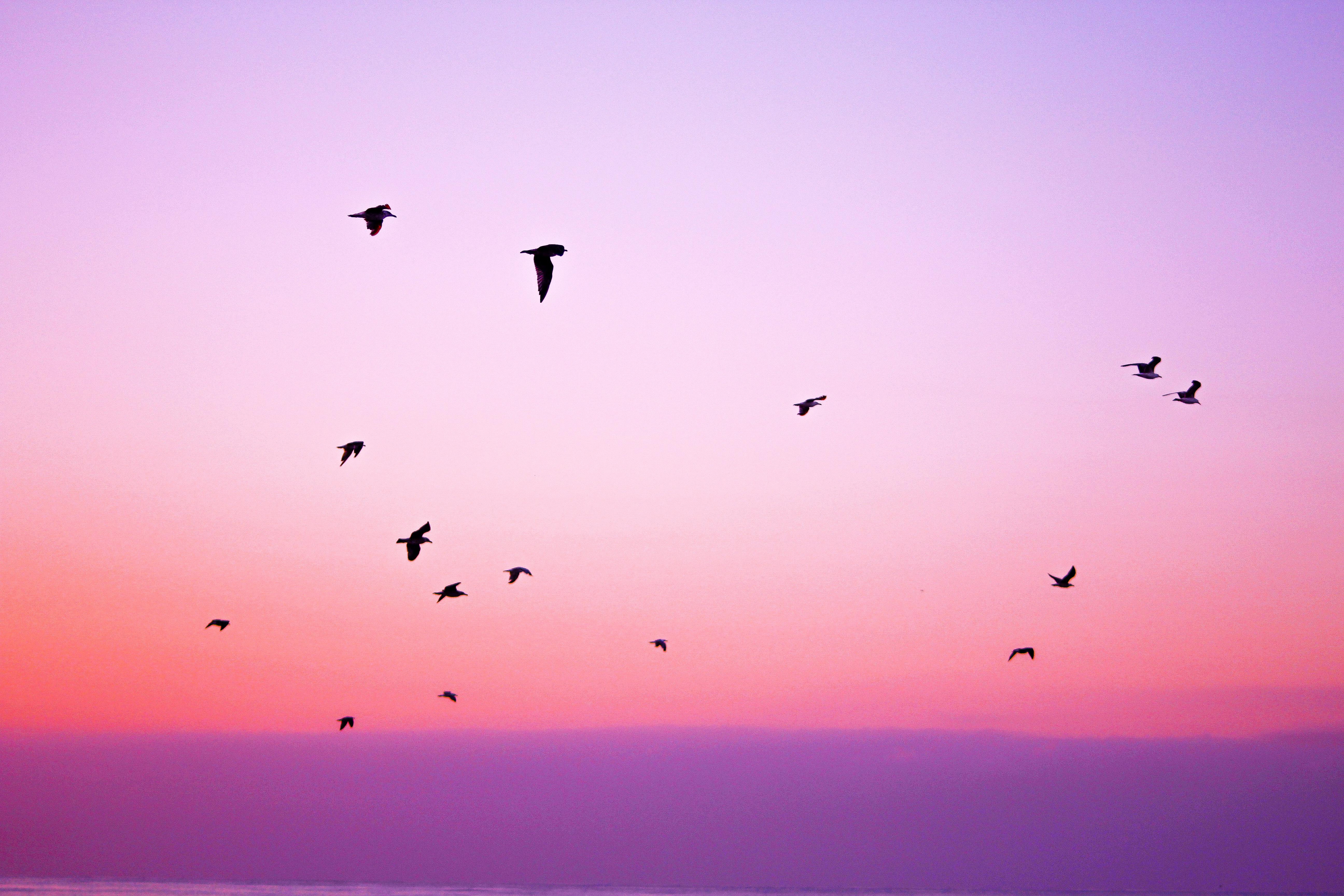 картинки с летящими птицами красивые это фото практически