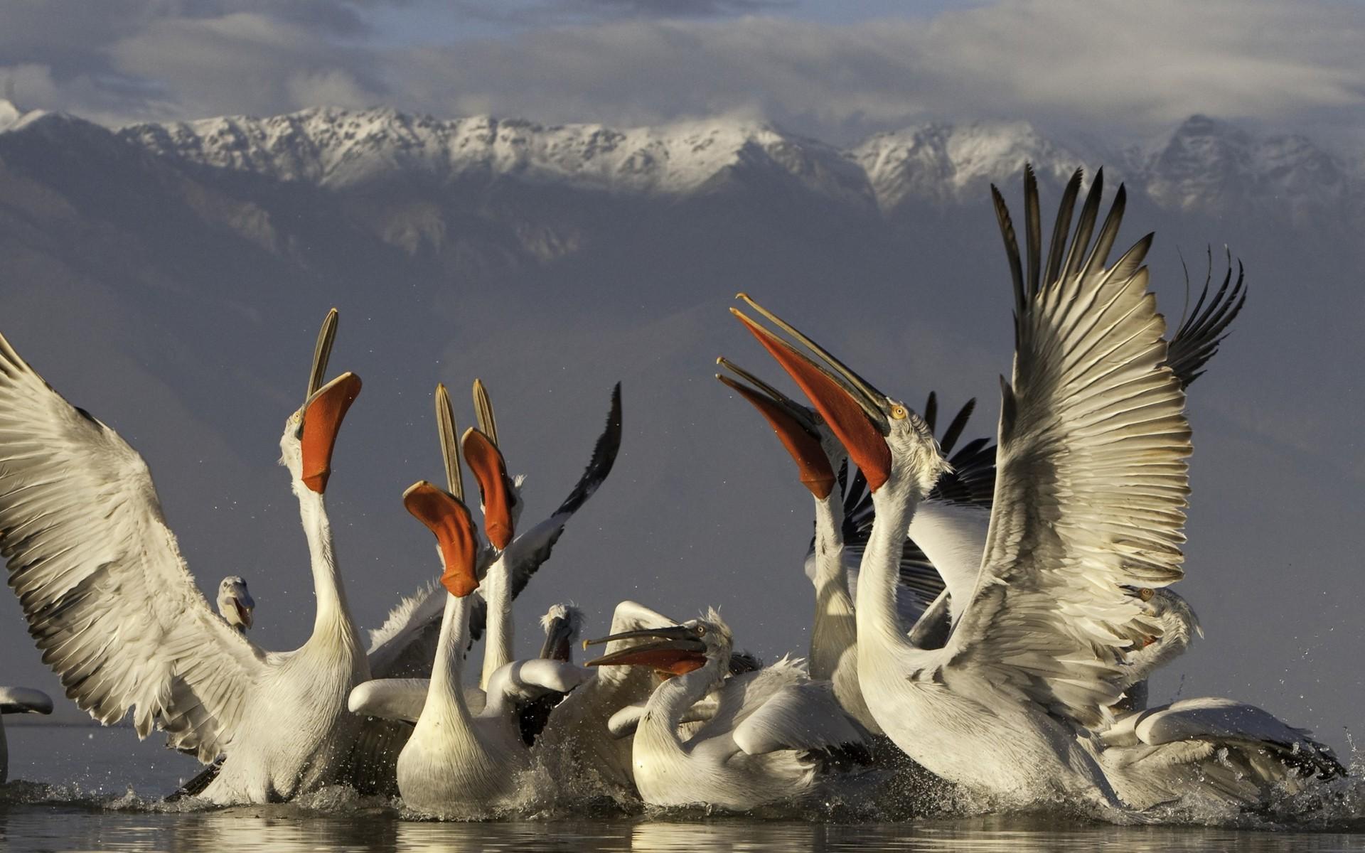 птицы и животный мир европы фото вы, какие известные