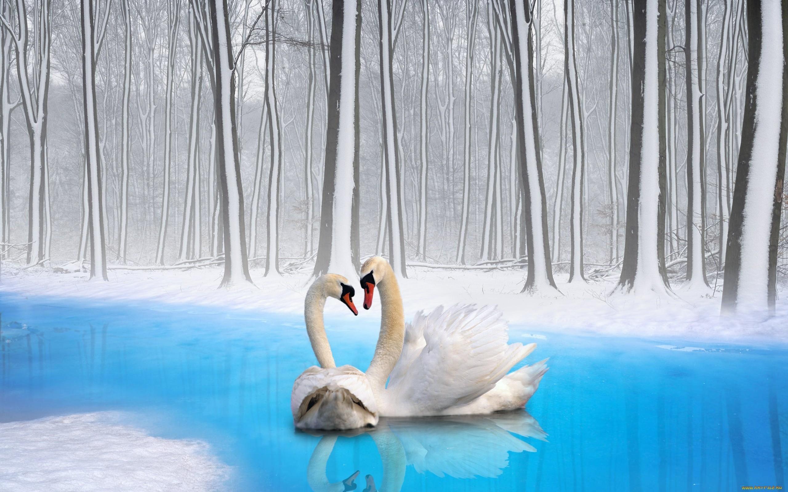 Романтические картинки с птицами
