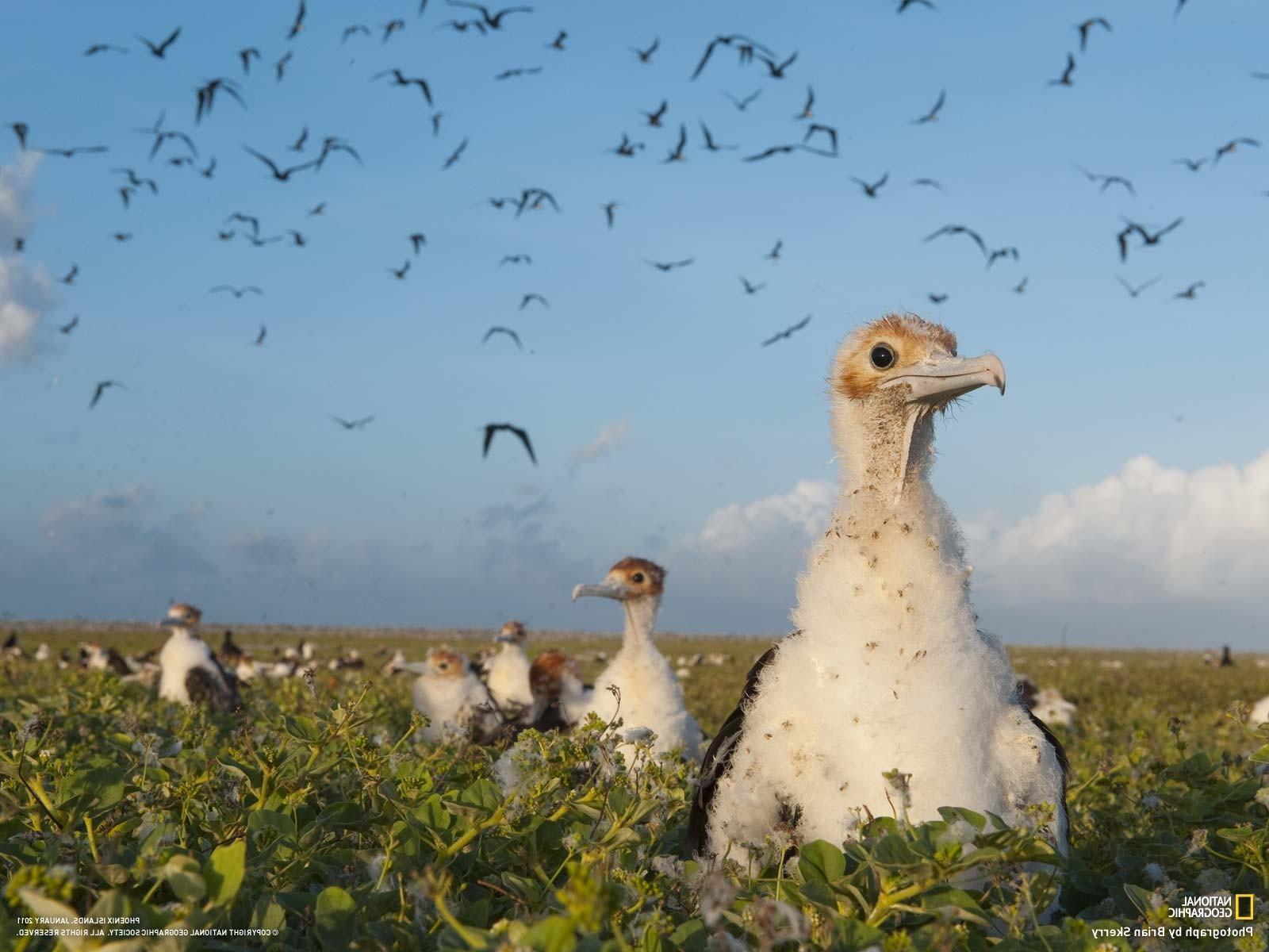 Wallpaper Birds Wildlife National Geographic Flock Fauna