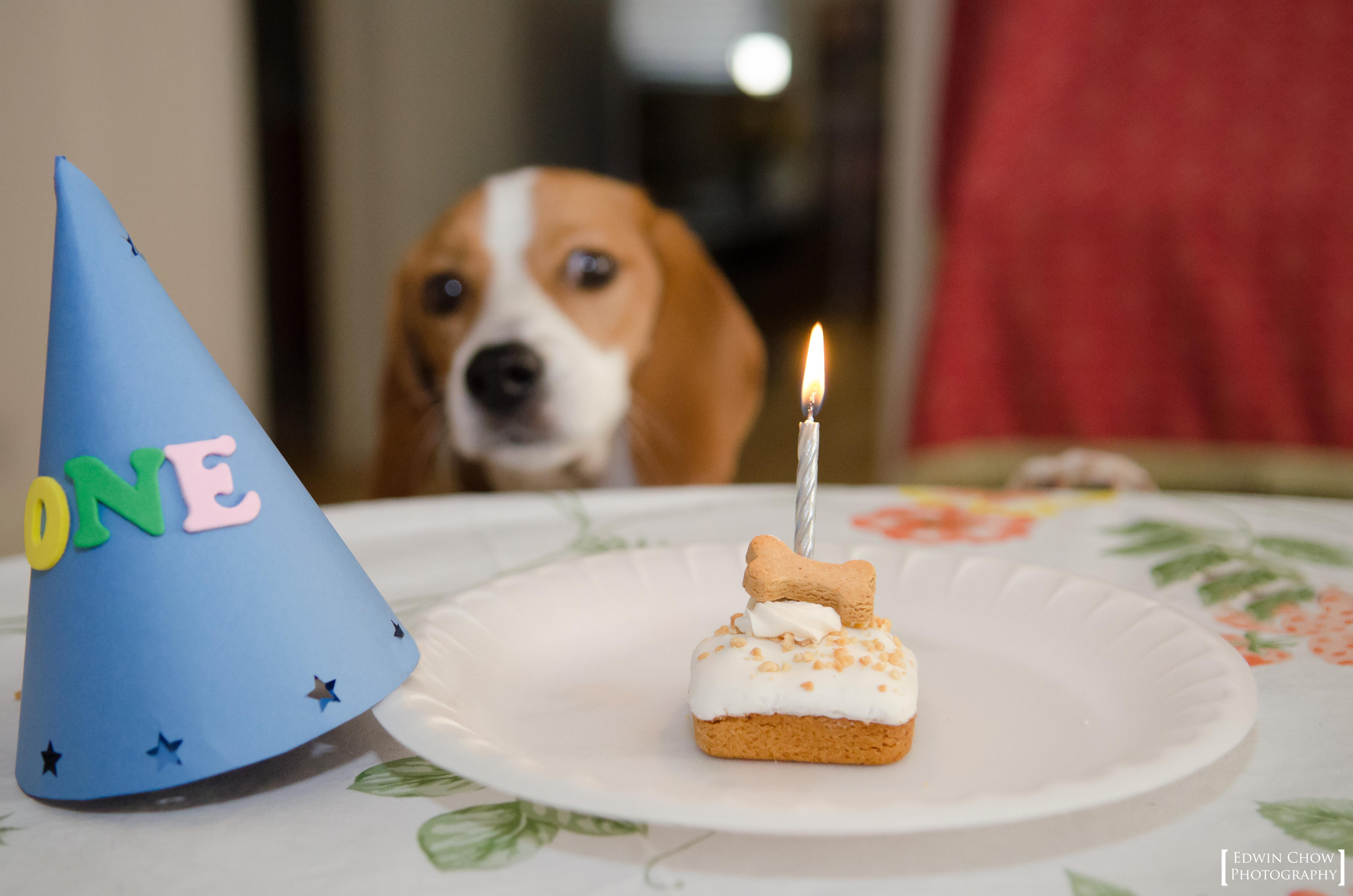 Картинка с днем рождения бигль