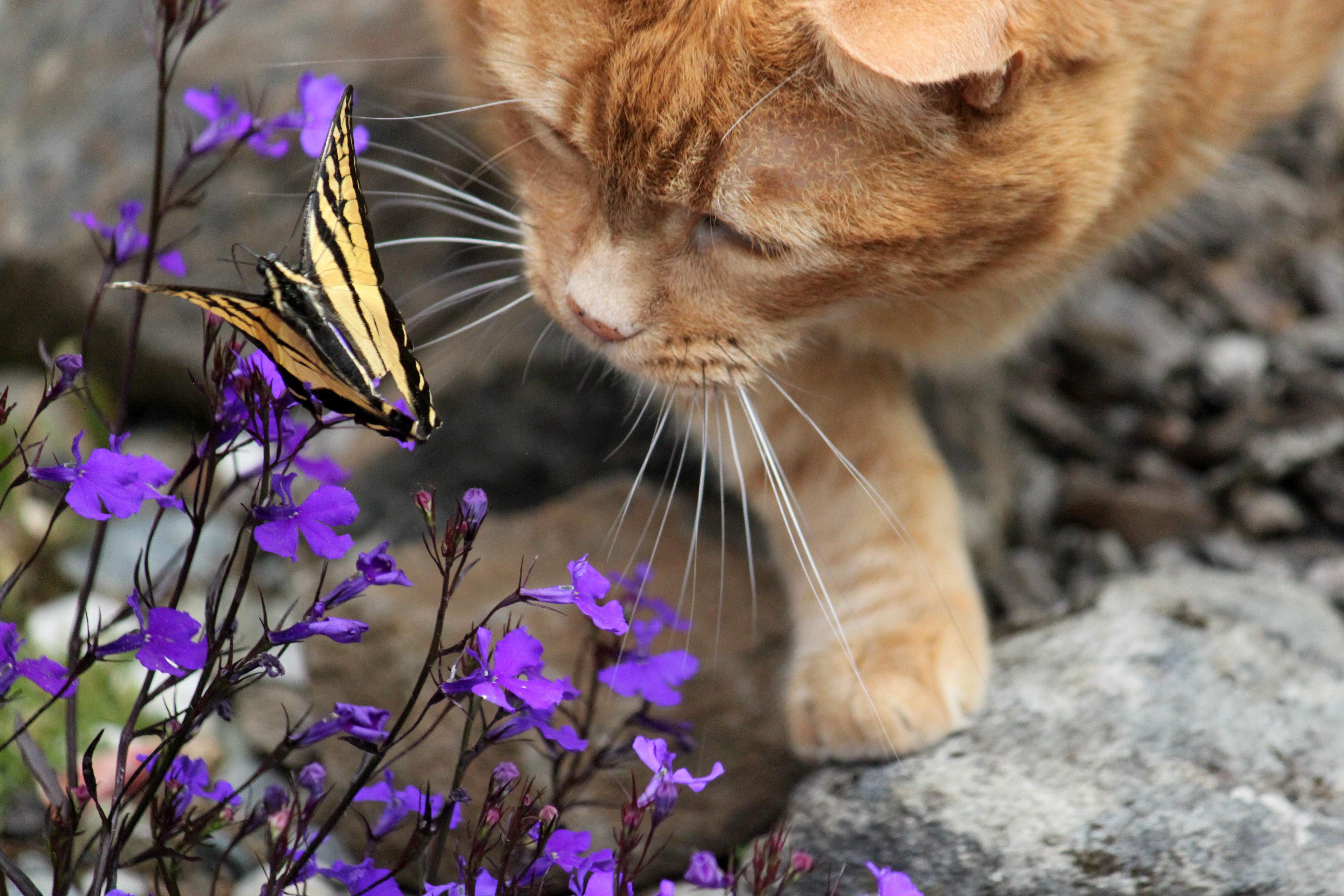 Wallpaper Birthday Flowers Cat Butterfly Garden Jd