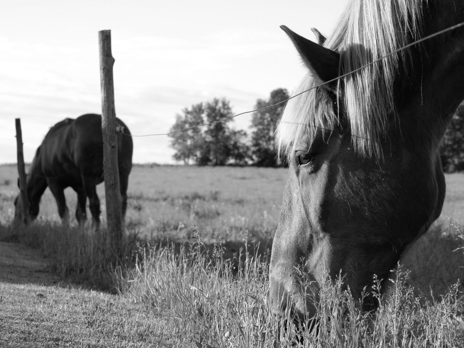 wallpaper animals grass pasture herd mare fauna. Black Bedroom Furniture Sets. Home Design Ideas