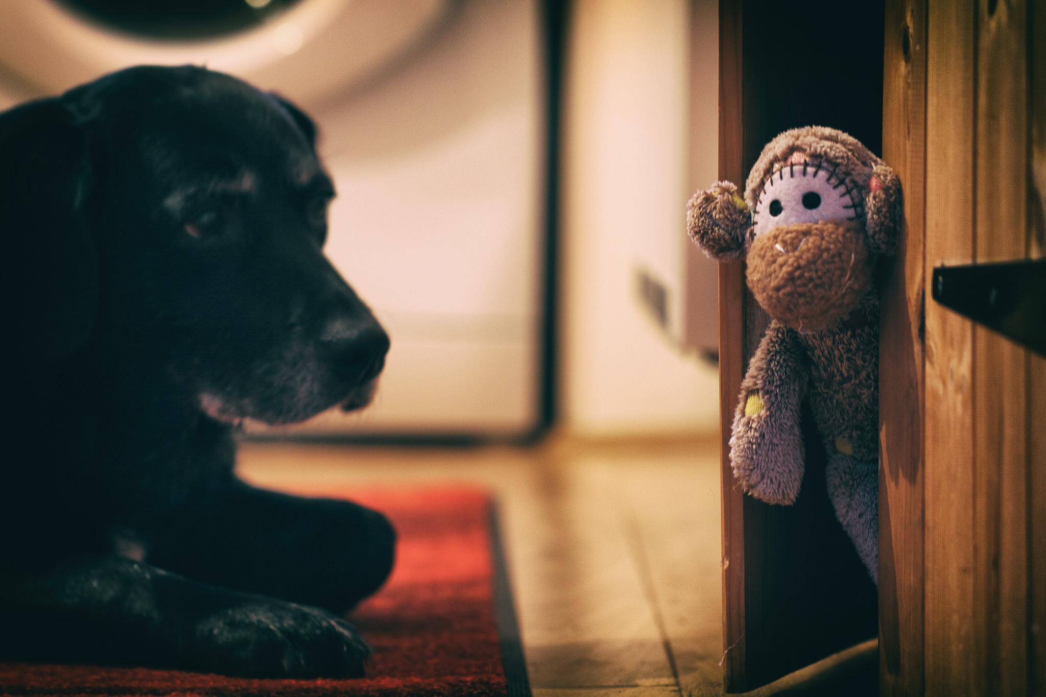 Amüsant Haustier Affe Foto Von Schwarz Blau Hund Spielzeug Schrank Versteckt Kunst